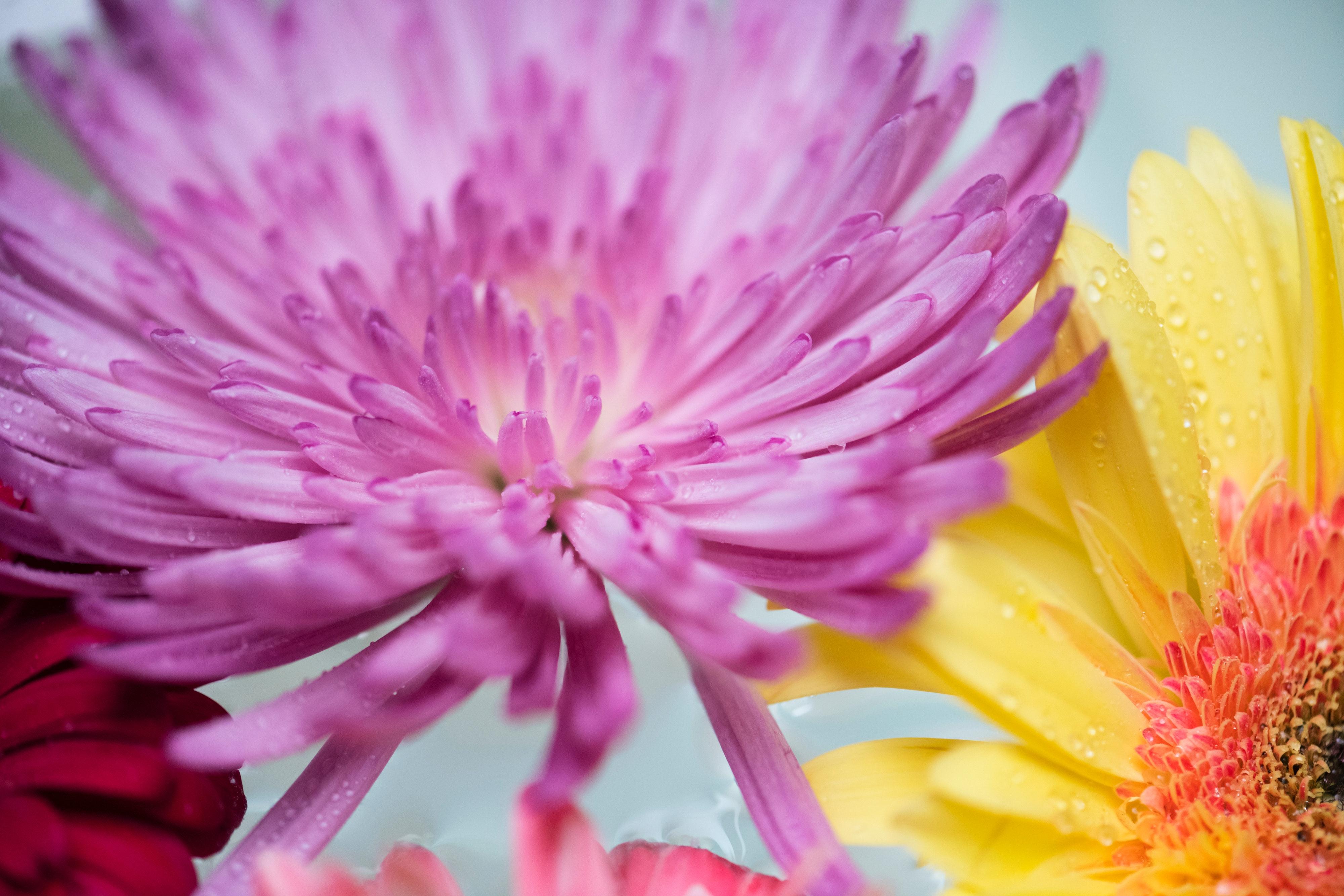 無料画像 4kの壁紙 バックグラウンド 綺麗な 咲く 開花する