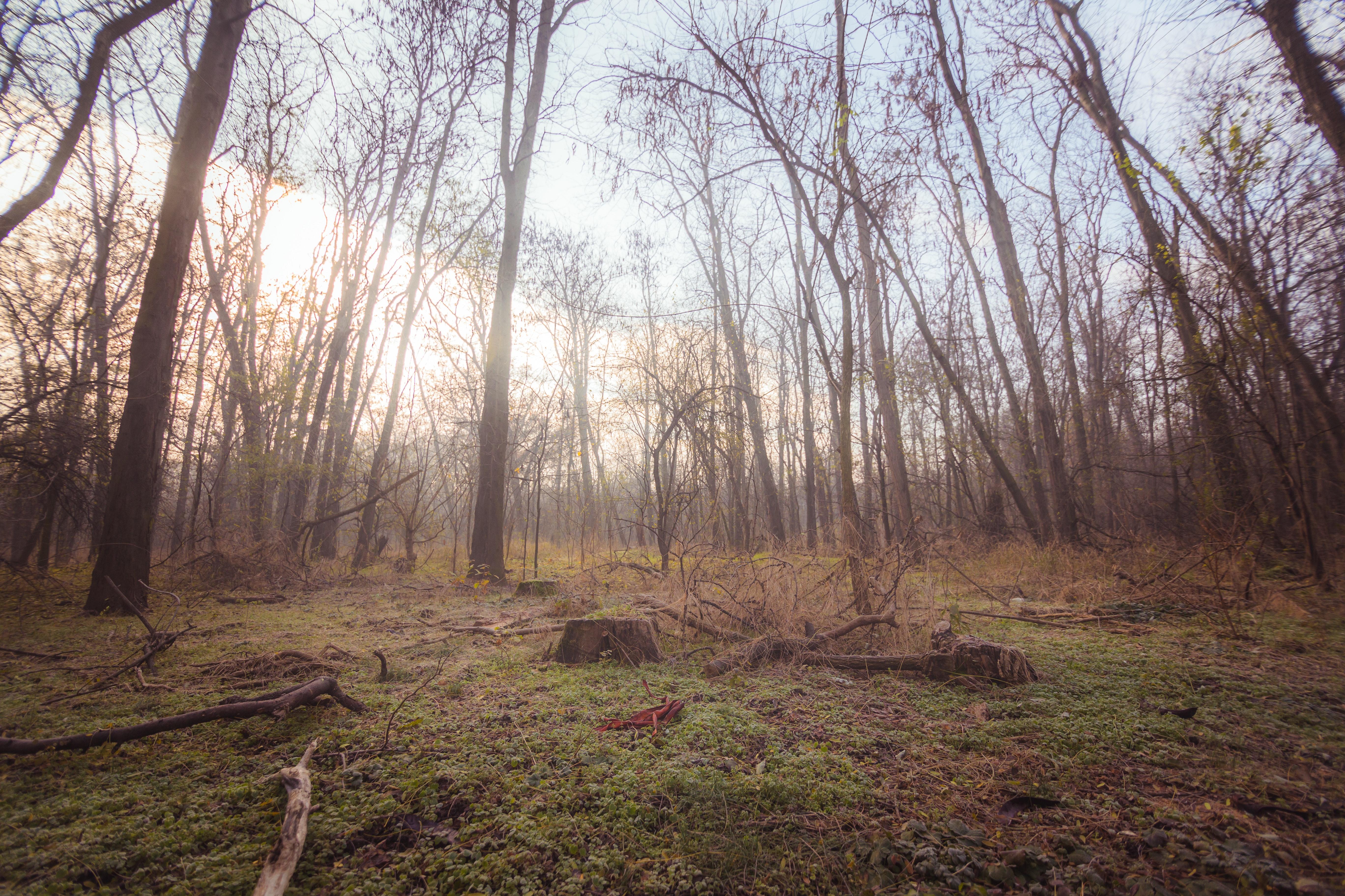 Free Images 4k Wallpaper Bare Trees Dawn Dusk Environment