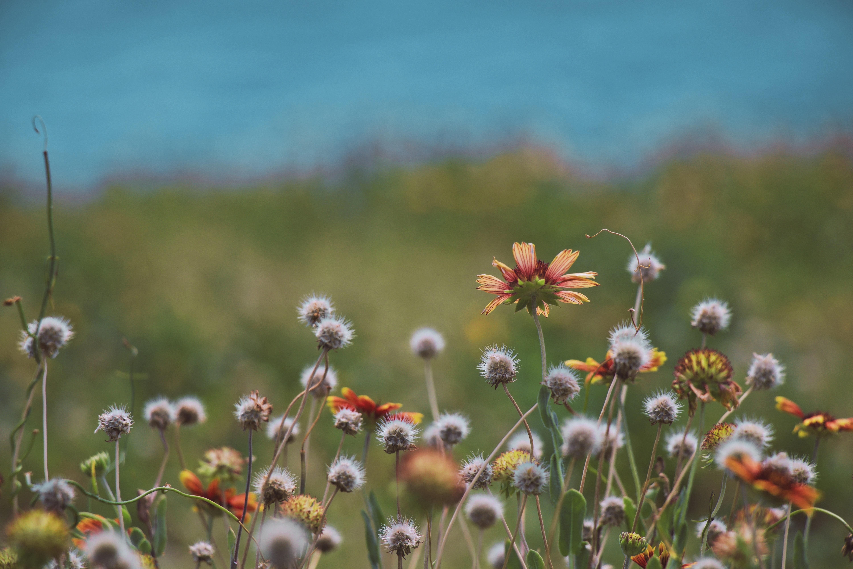 Free Images 4k Wallpaper Beautiful Bloom Blooming Blur