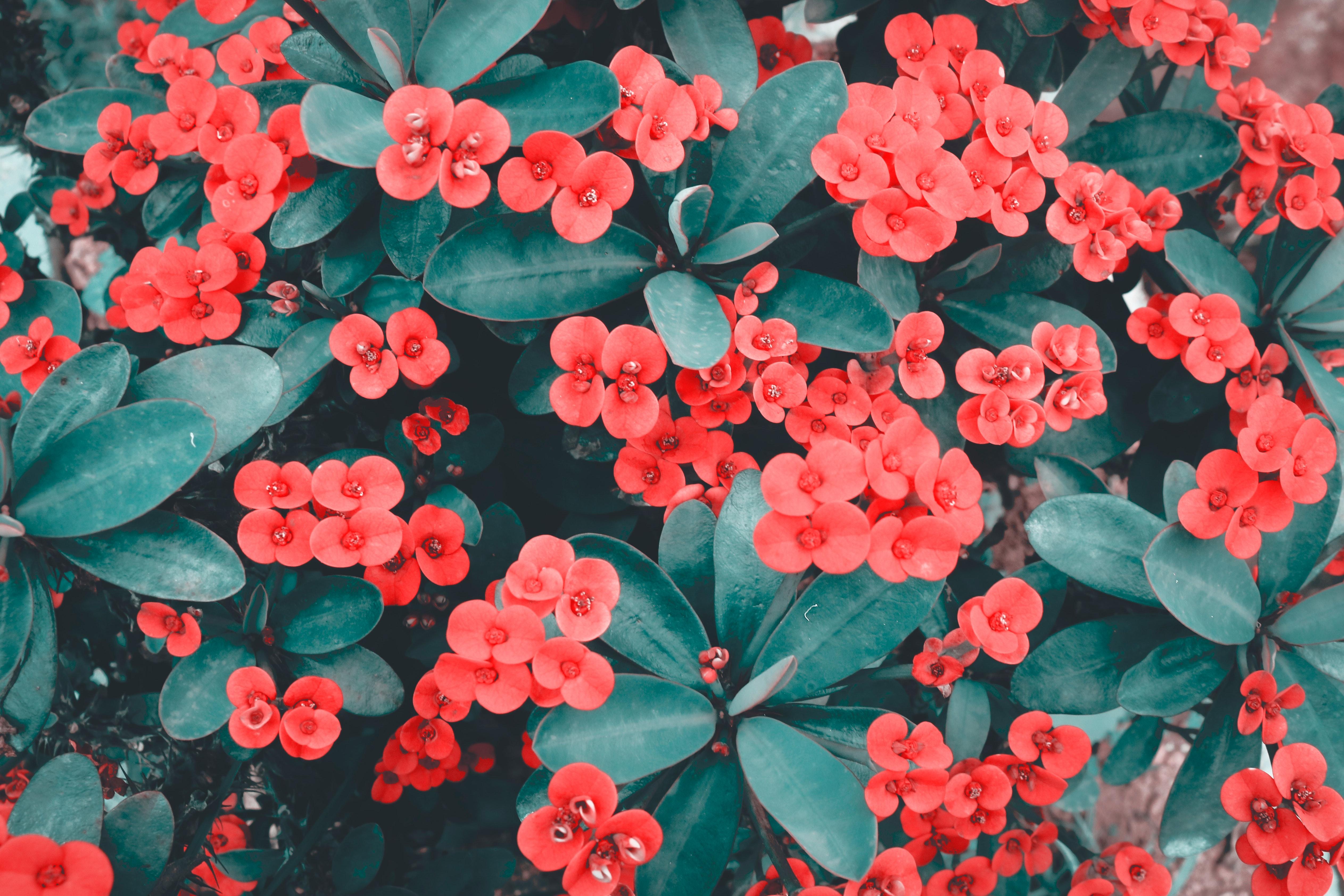 Free Images 4k Wallpaper Beautiful Bloom Blooming