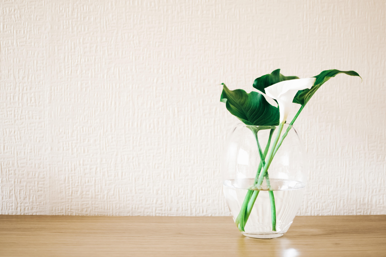 Gambar 4k Wallpaper Indah Berkembang Berbunga Flora