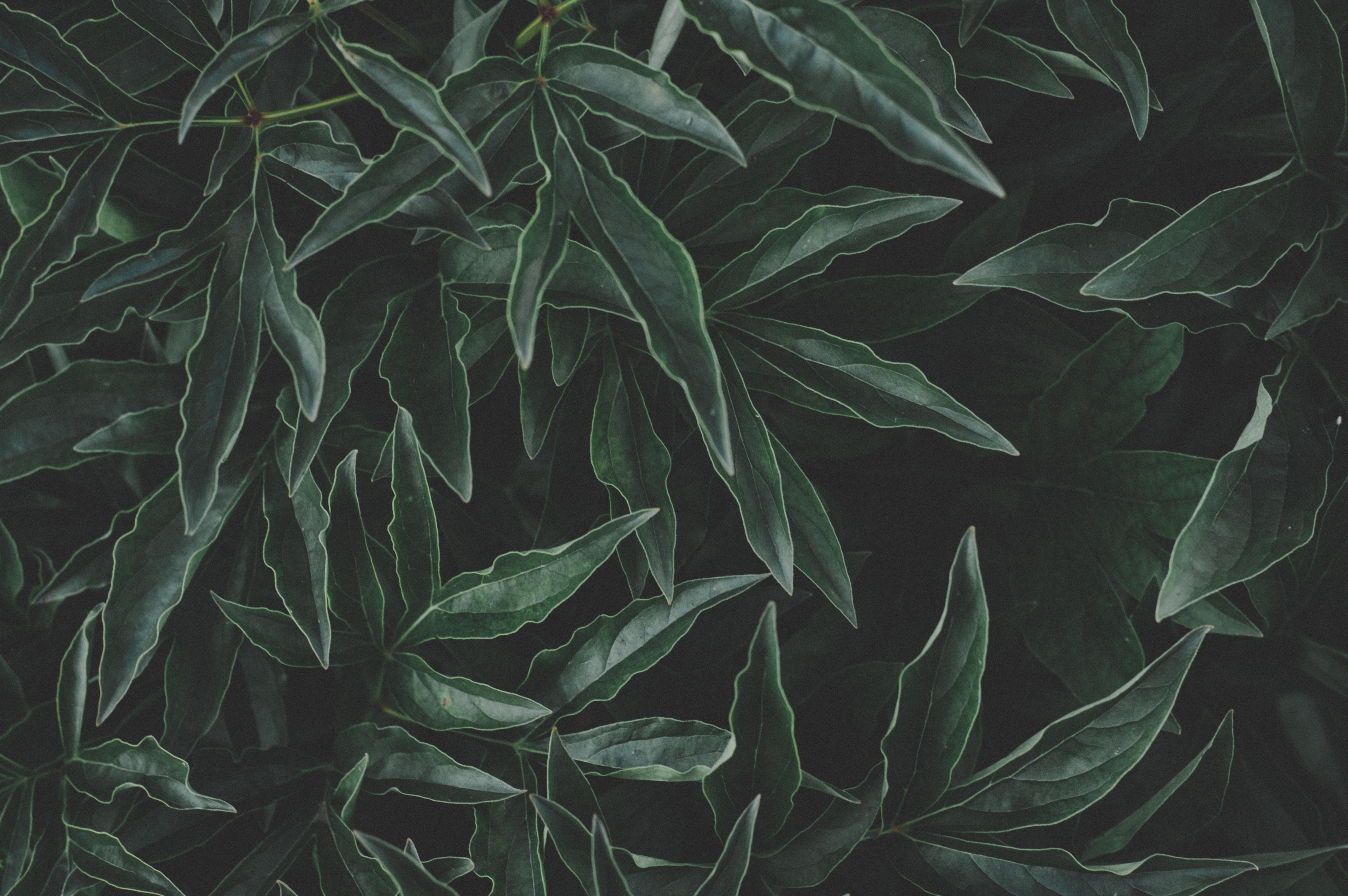 Gambar 4k Wallpaper Indah Merapatkan Warna Gelap