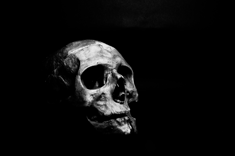 Free Images 4k Wallpaper Black And White Bone Close Up