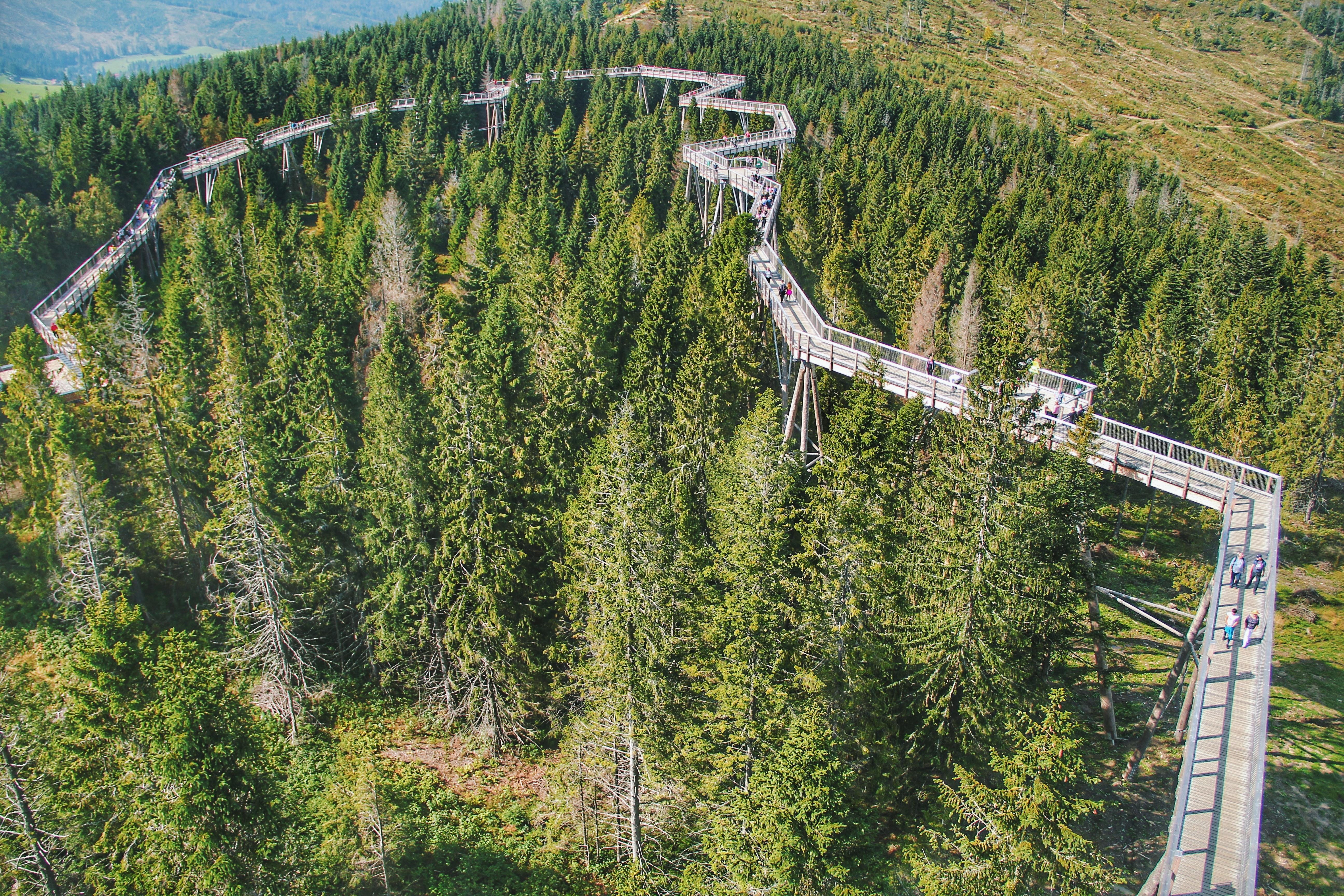無料画像 4kの壁紙 ブリッジ 雲 針葉樹 田舎 環境 モミの木
