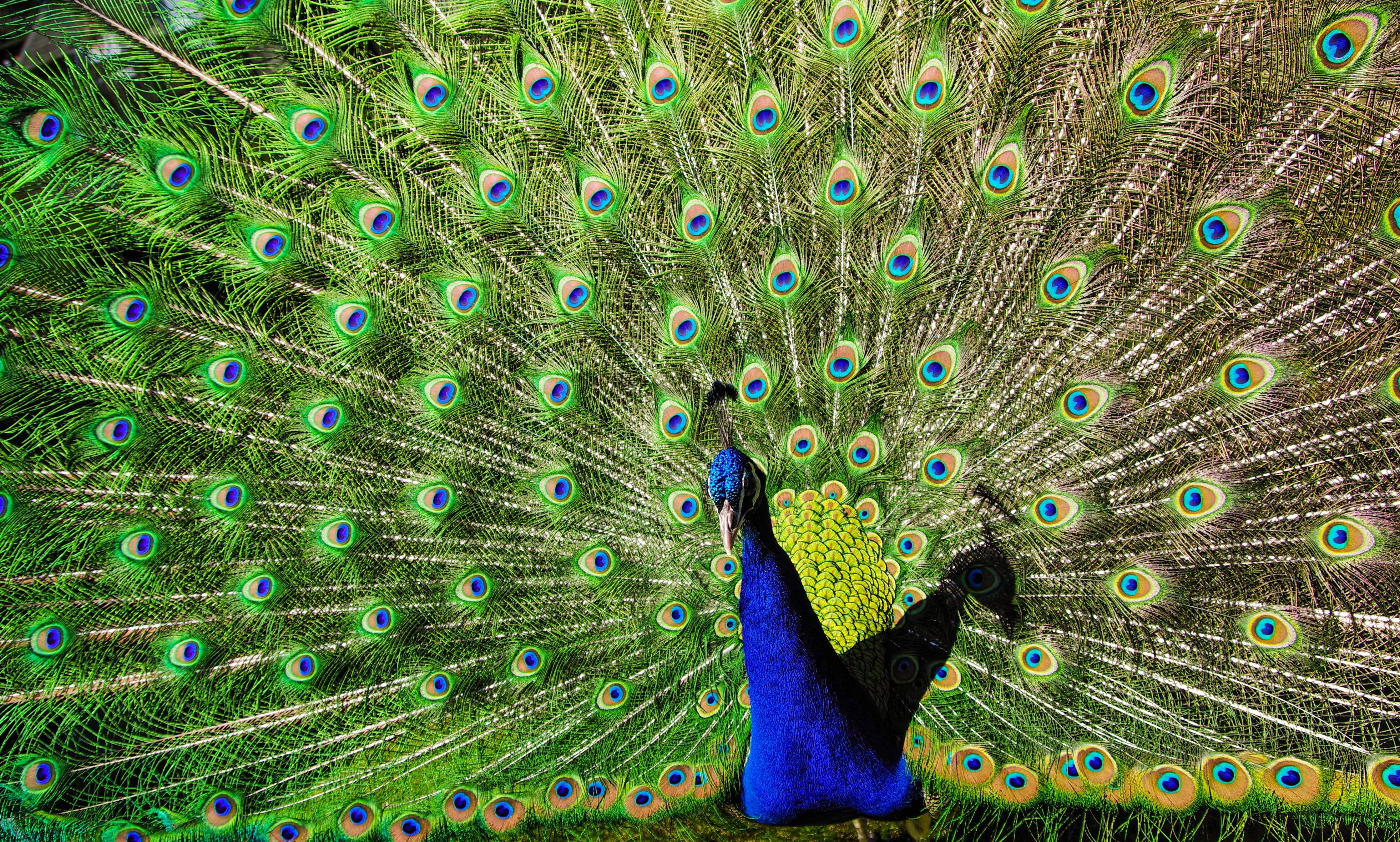 Banco De Imagens Abstrato Animal Animal Fotografia Bonita
