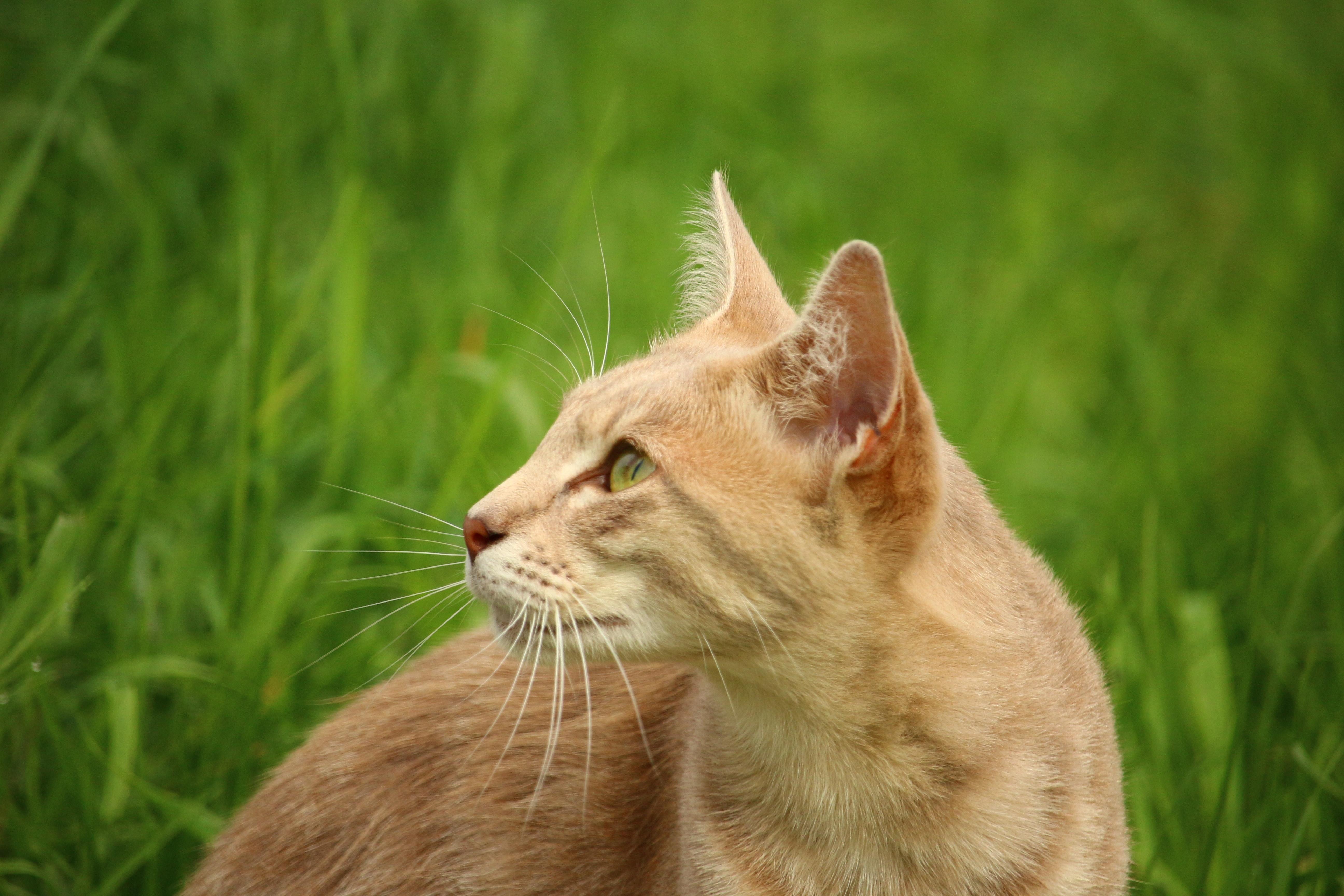Download 68+ Gambar Kucing Dari Samping Terbaik Gratis