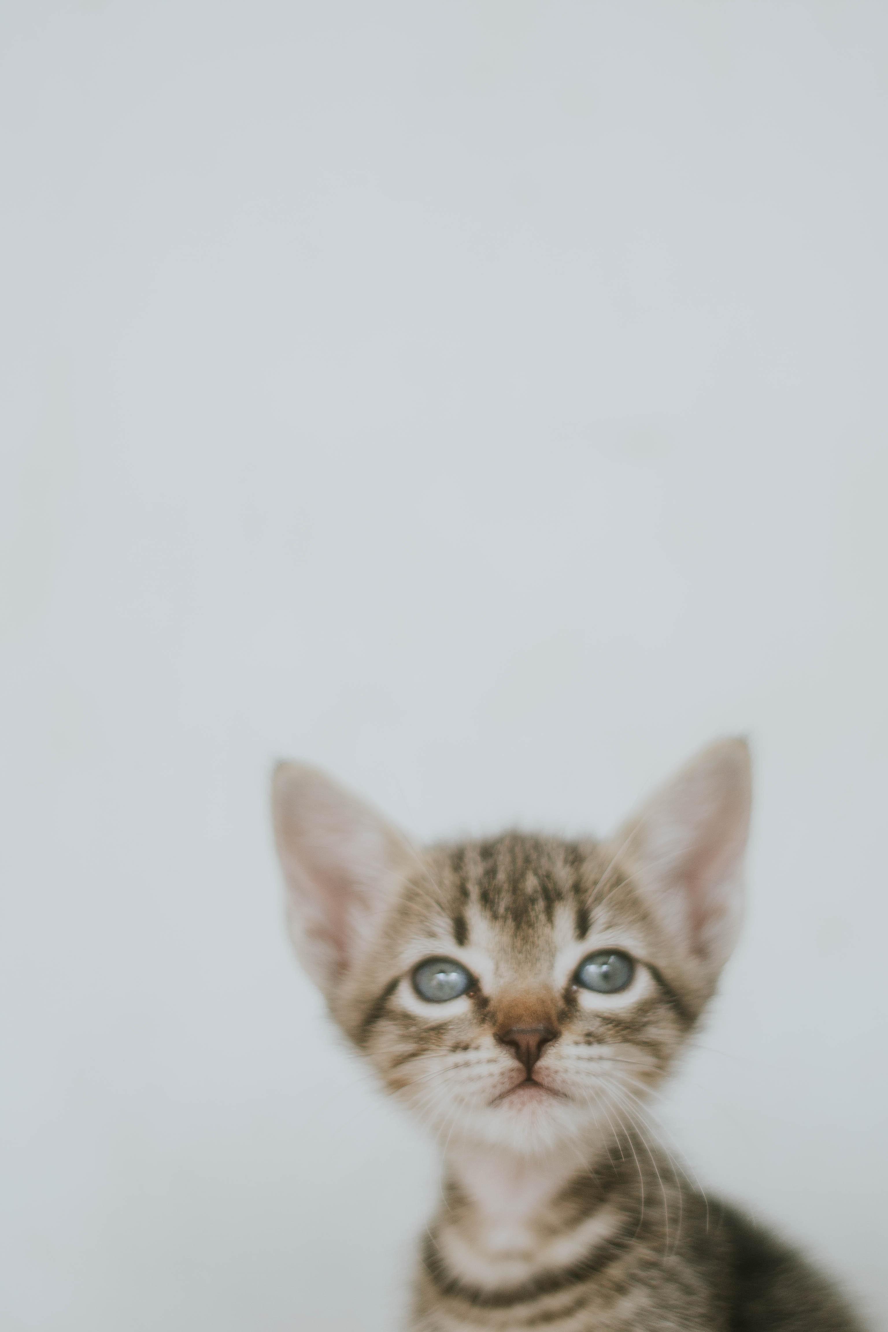 roztomilý Lil mačička