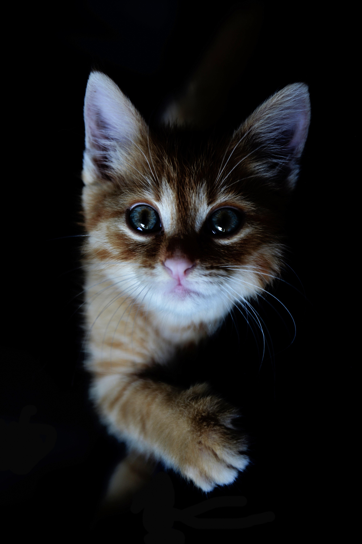 Unduh 80+  Gambar Kucing Imut Cantik Paling Bagus HD