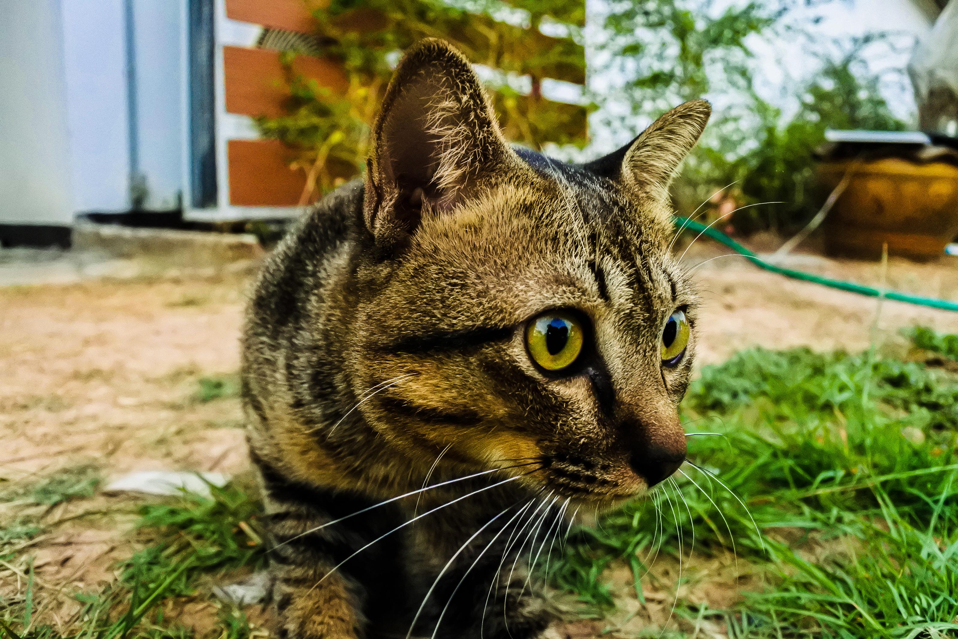 Download 52+ Background Cantik Kucing HD Paling Keren