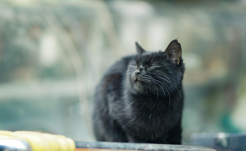 無料画像 : 愛らしい, 動物, 黒...