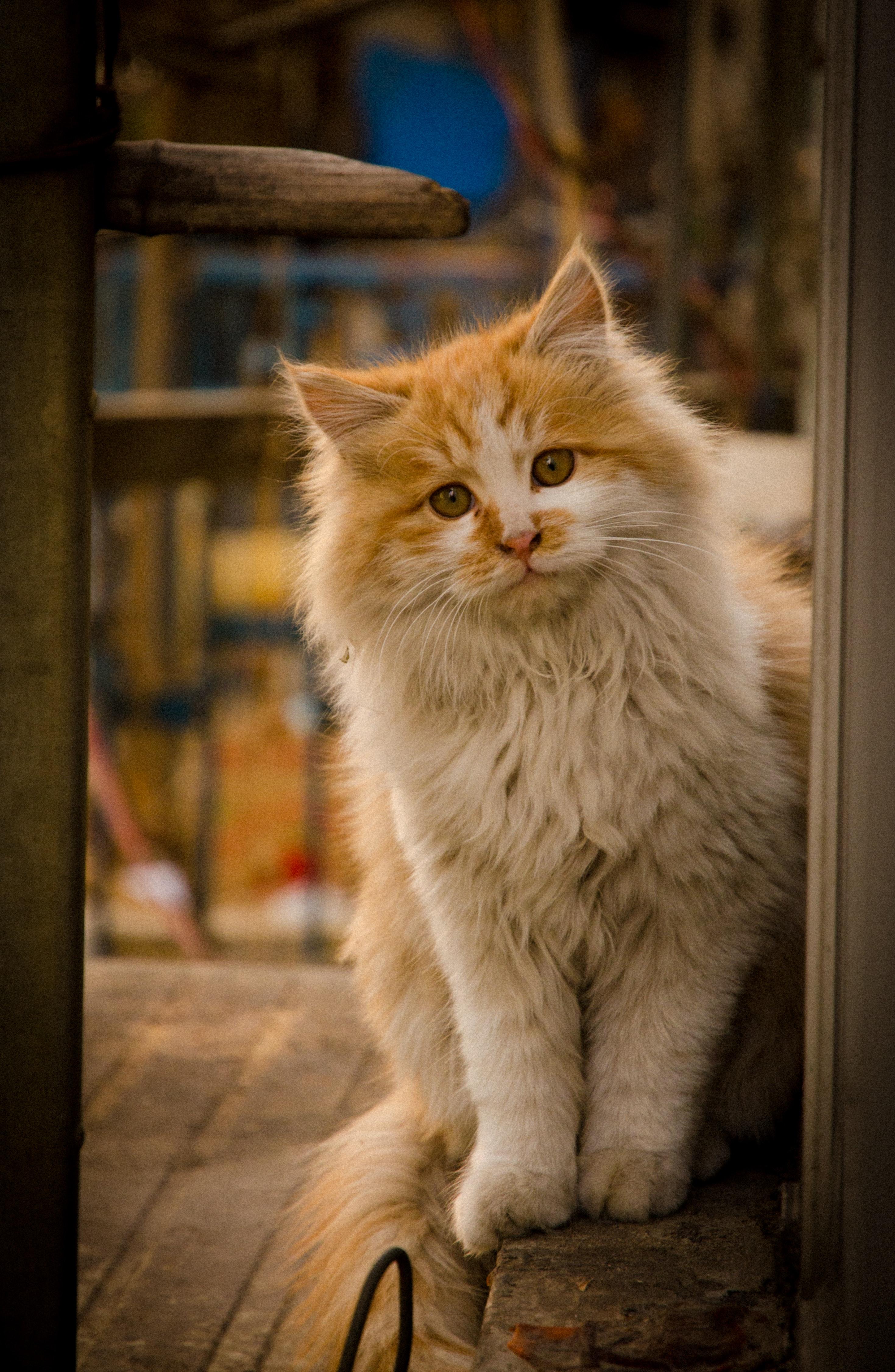 zadarmo Fotografie mačička