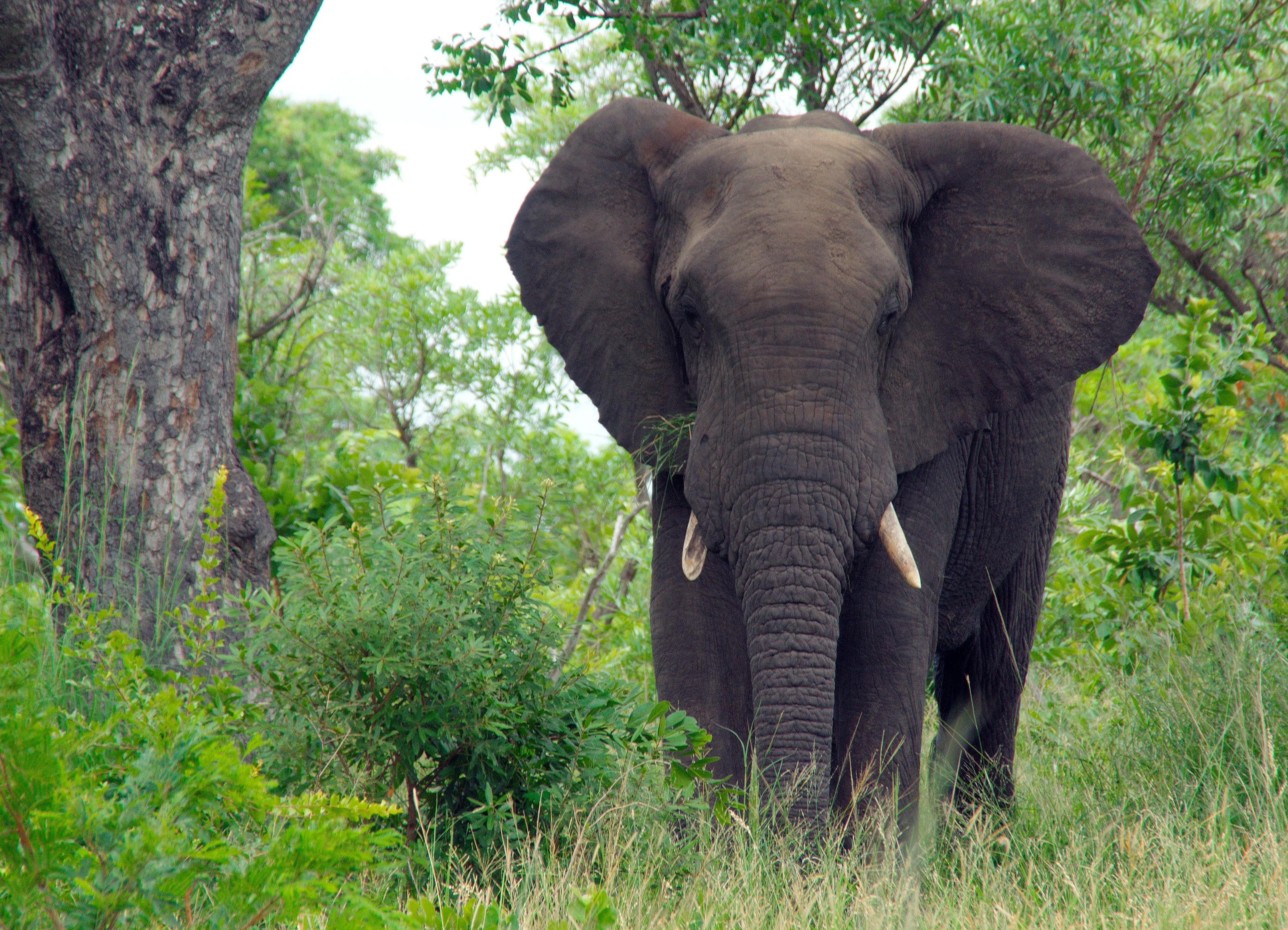 Free Images : adventure, animal, wildlife, jungle, mammal ...