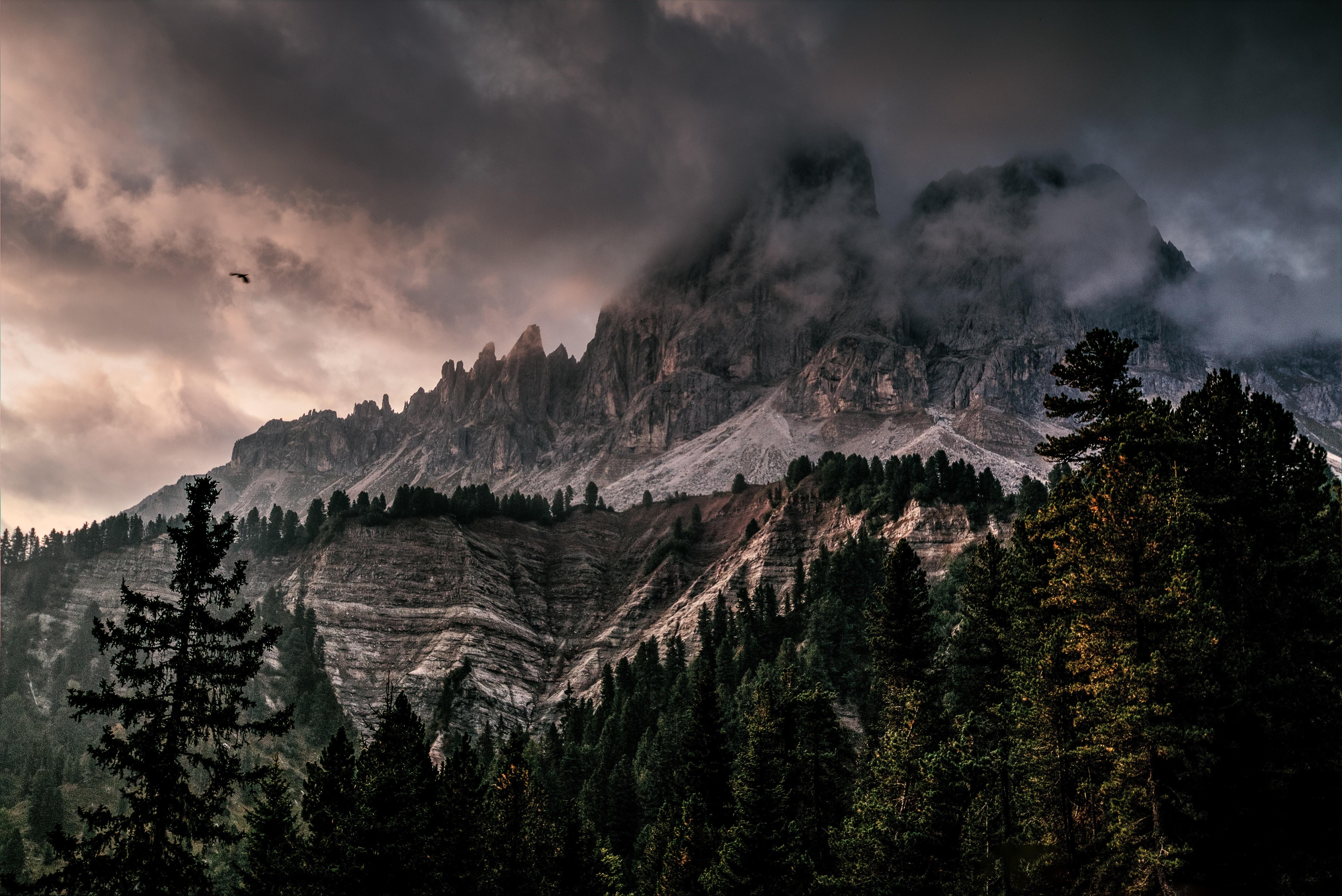 Free Images Adventure Climb Conifer Dawn Desktop Wallpaper