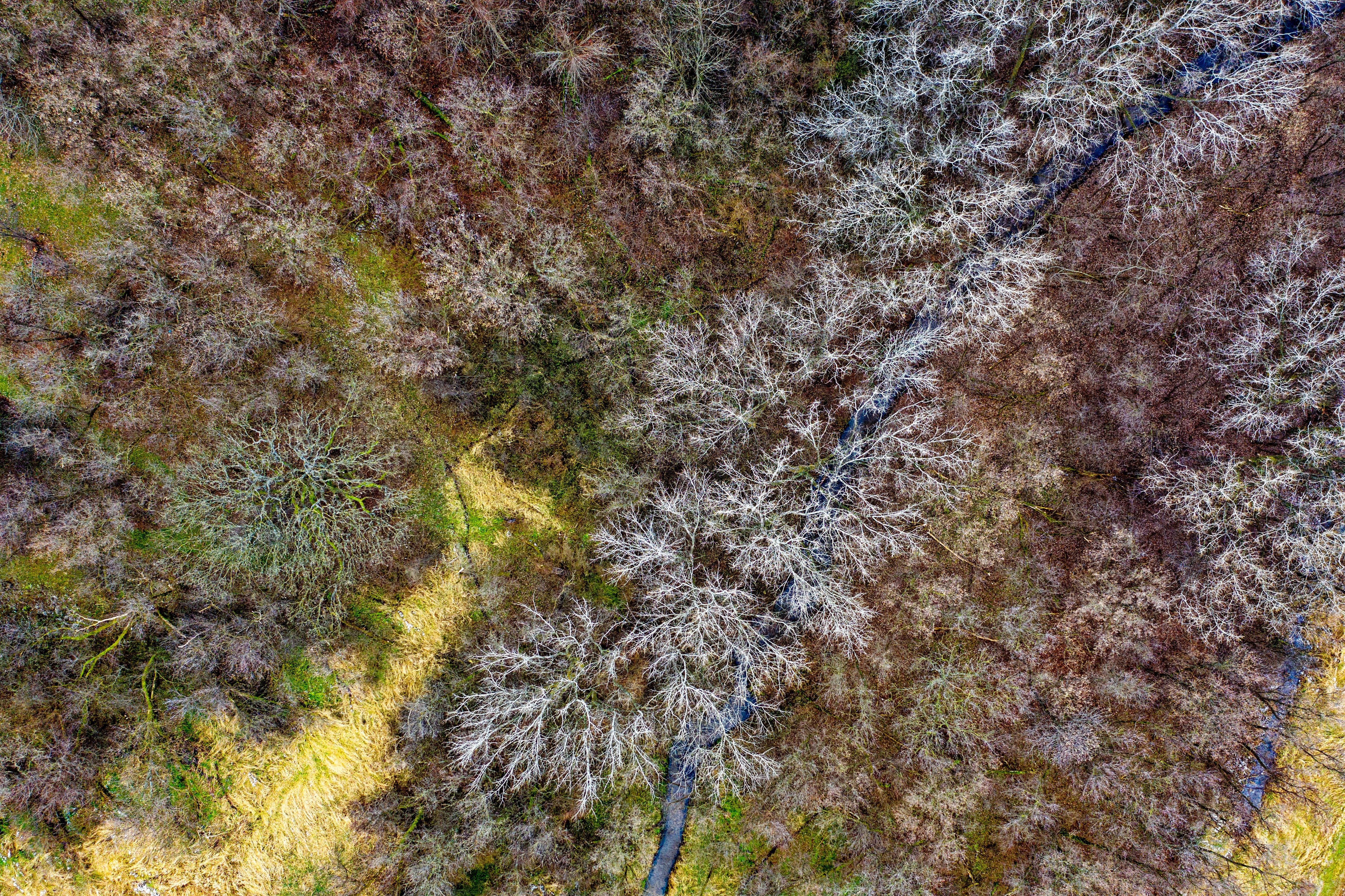 Poze Lovitură Aeriană Pasăre Ochi Vedere Colorate