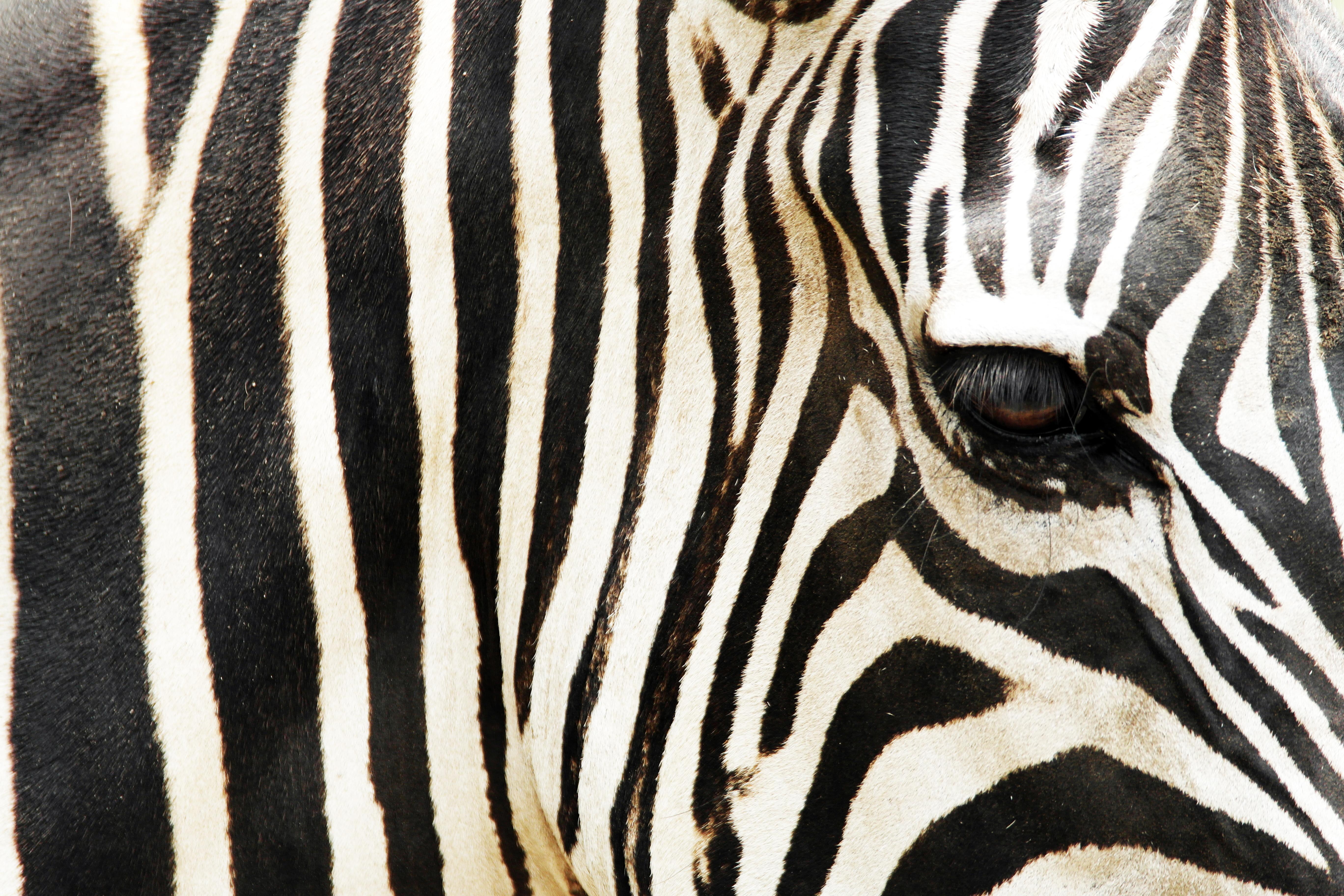 afrikai szex vadonban