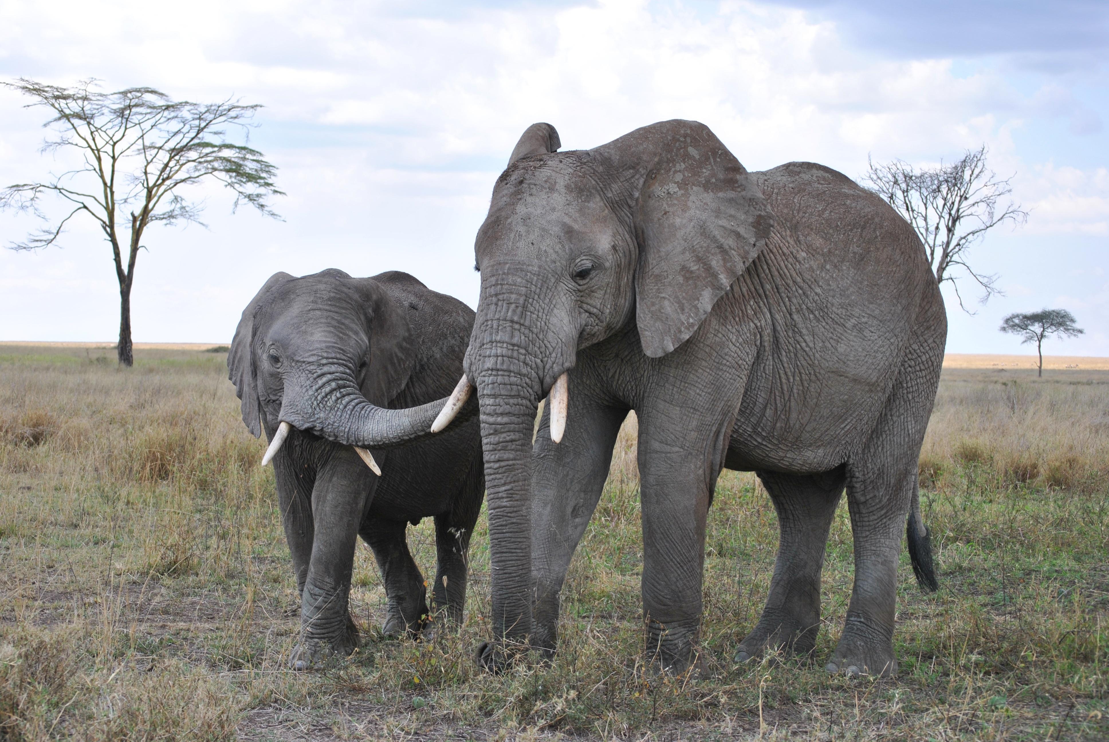 Serengeti National Park >> Free Images : africa, tanzania, national park, safari ...