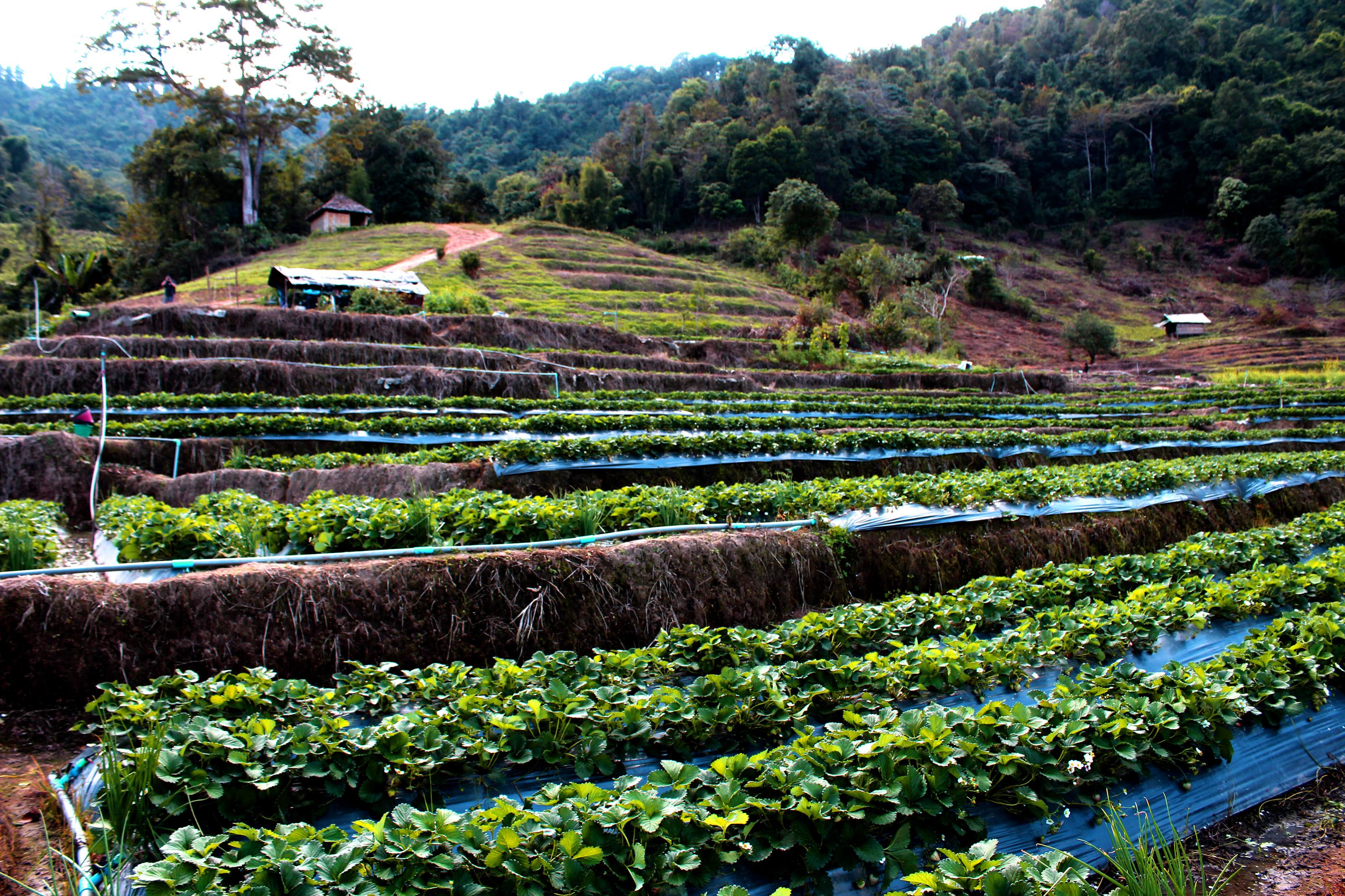 Fotos Gratis Asombroso Plantación Agricultura Estación