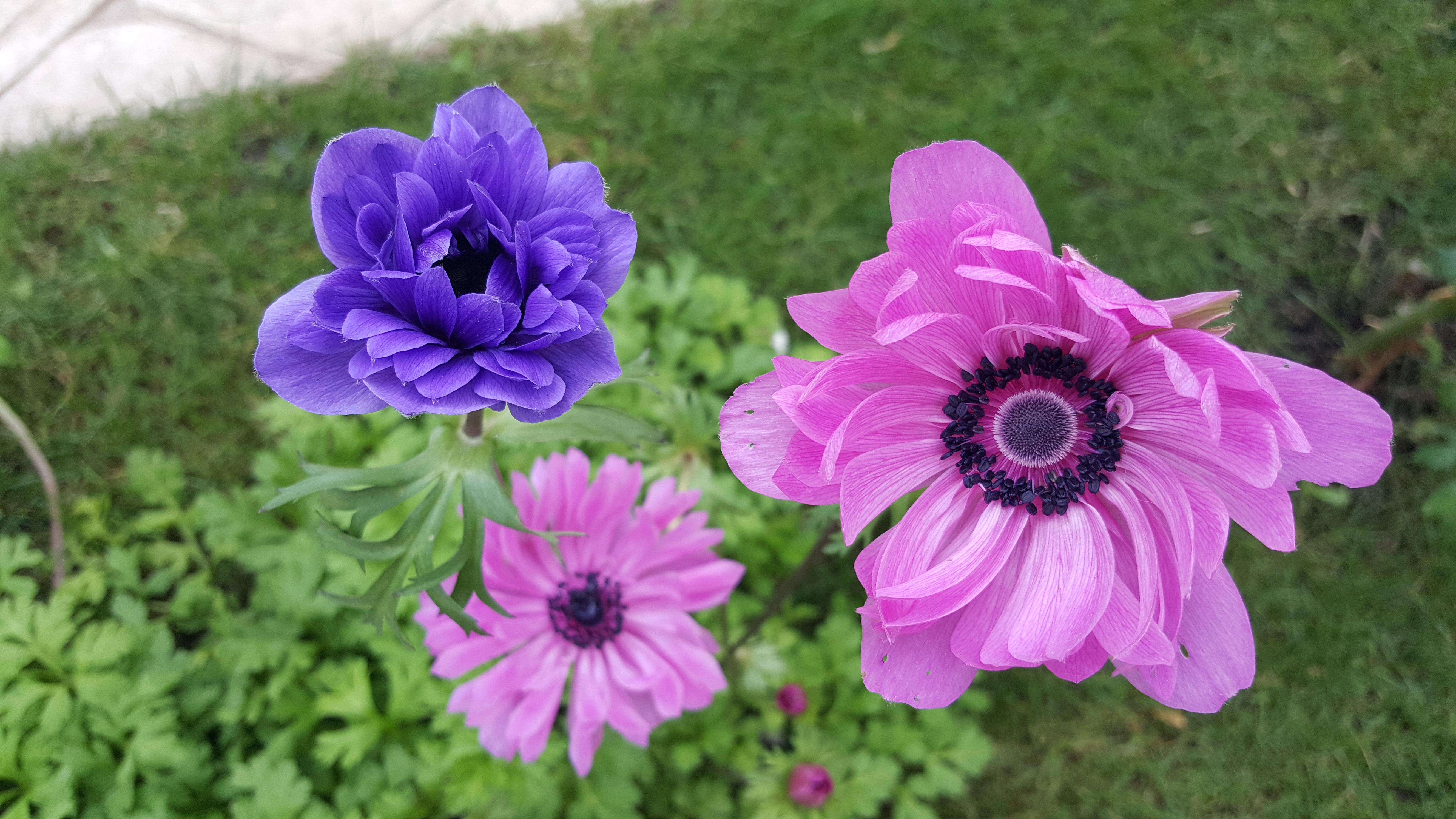 violet colour flower images download