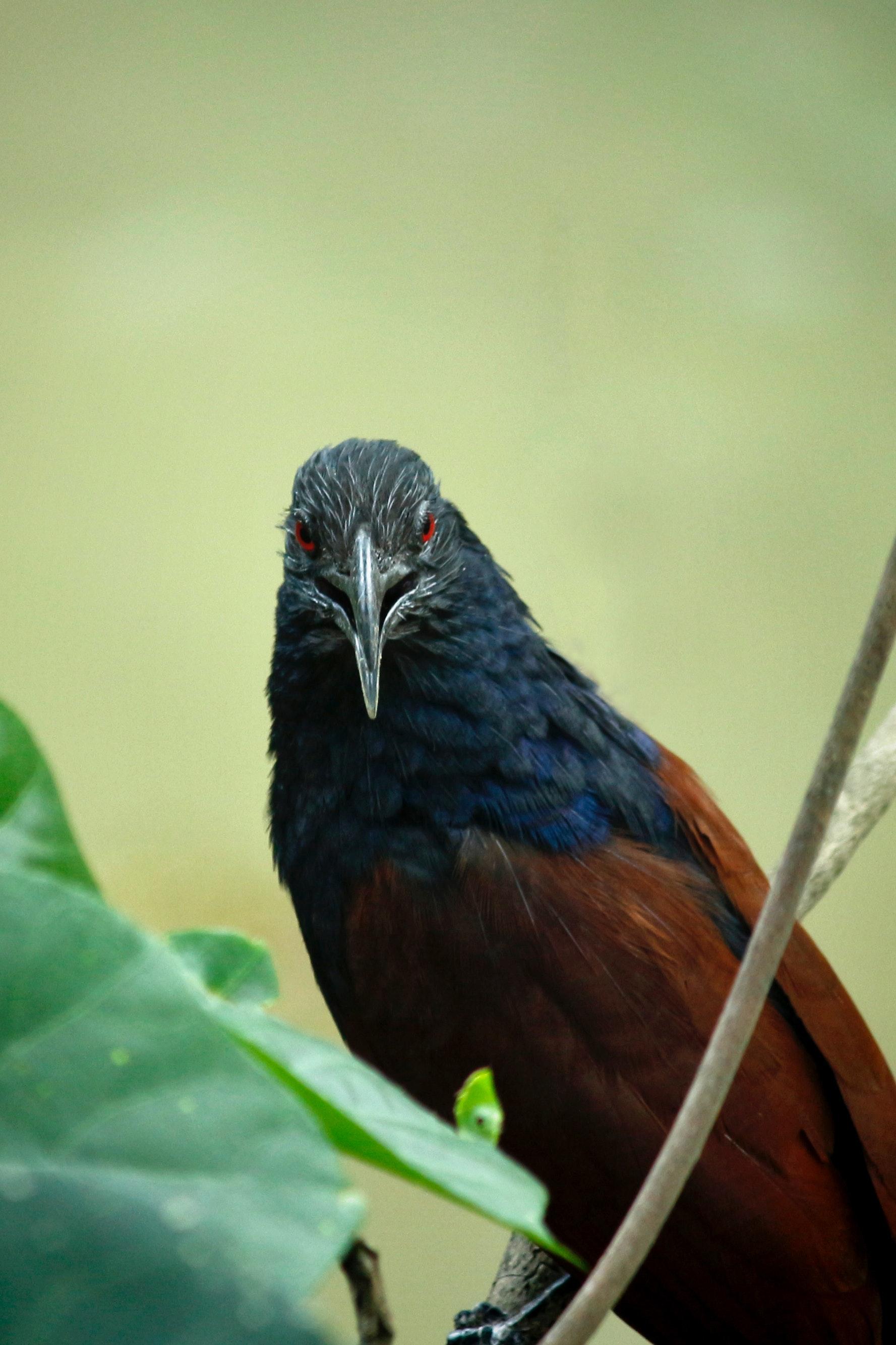 Φωτογραφίες από το μεγαλύτερο πουλί δωρεάν λεσβιακές ταινίες αποπλάνησης