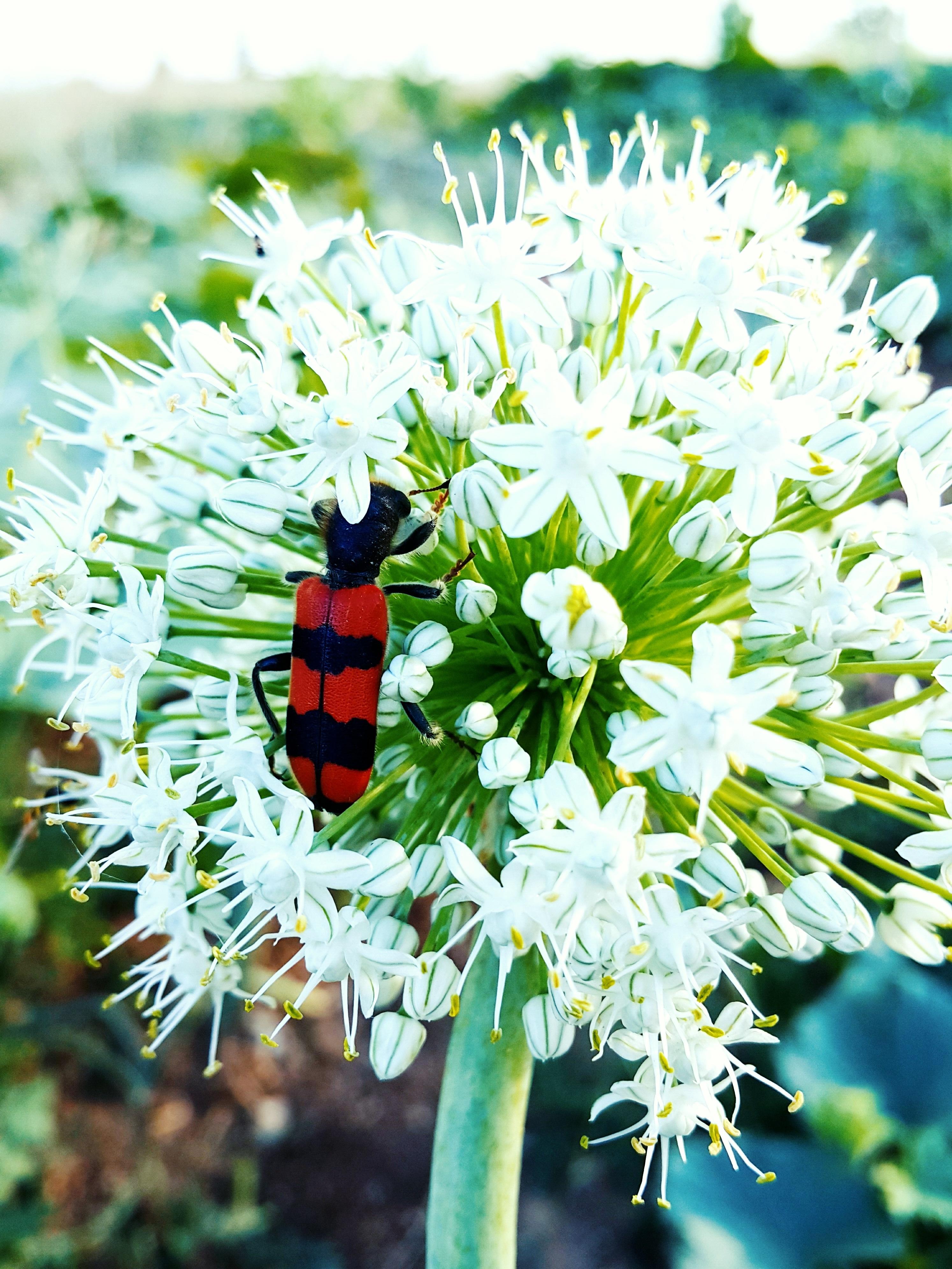 foto de Images Gratuites : animal, Photographie d'animaux, animaux, fleur ...