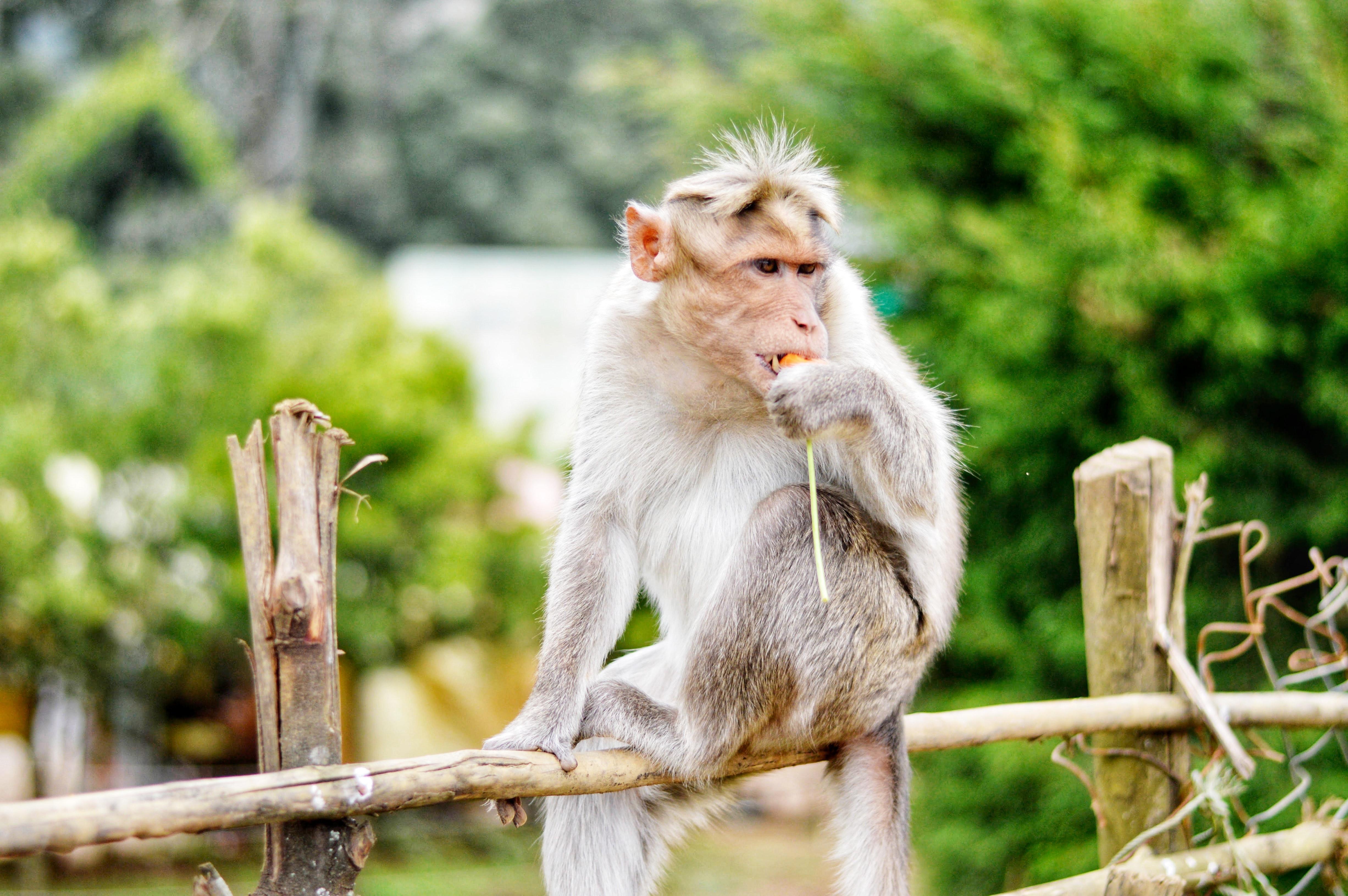 Images gratuites photographie d 39 animaux brouiller - Images d animaux sauvages gratuites ...