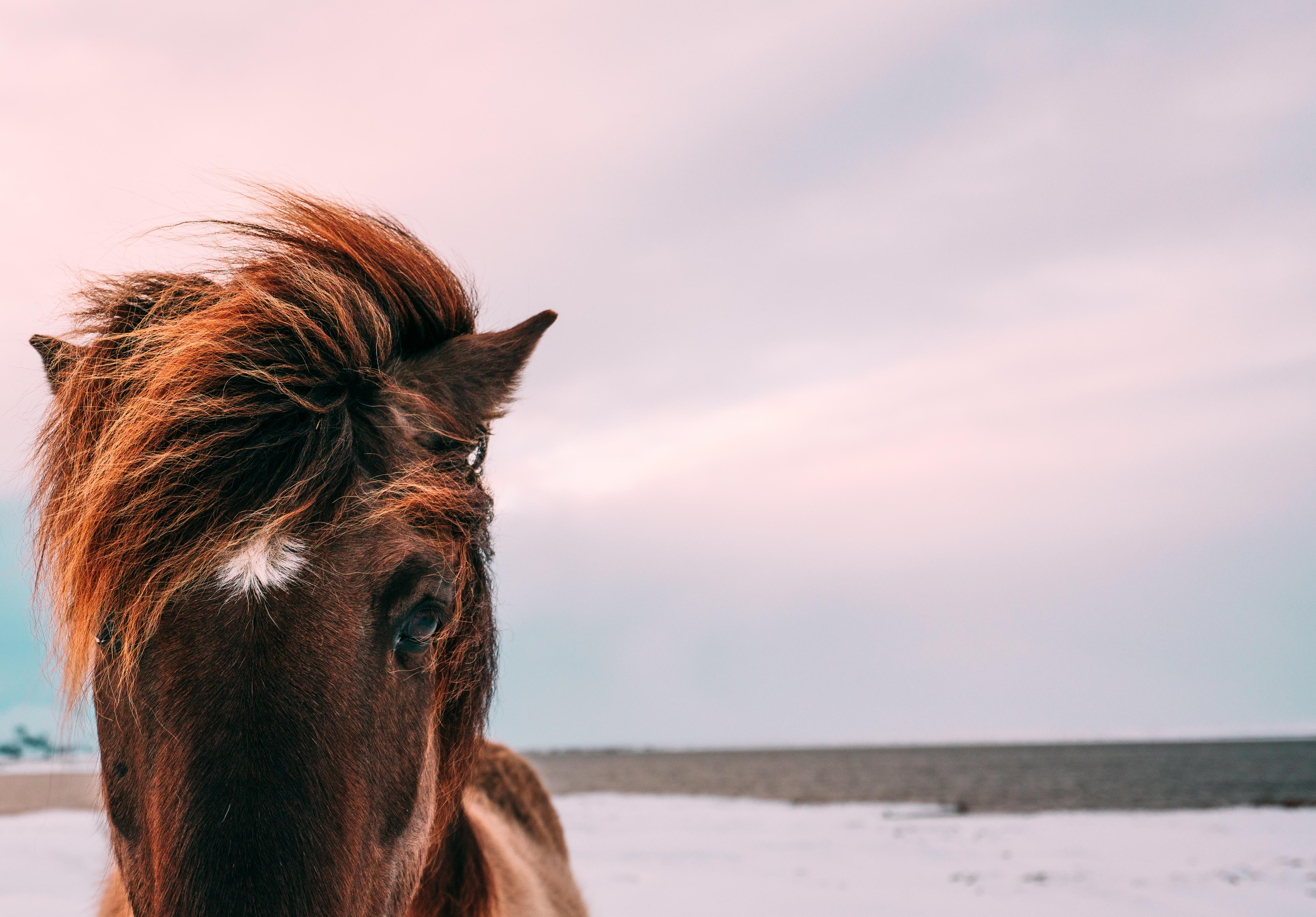 foto de Images Gratuites : animal, Photographie d'animaux, fermer, Hd fond ...