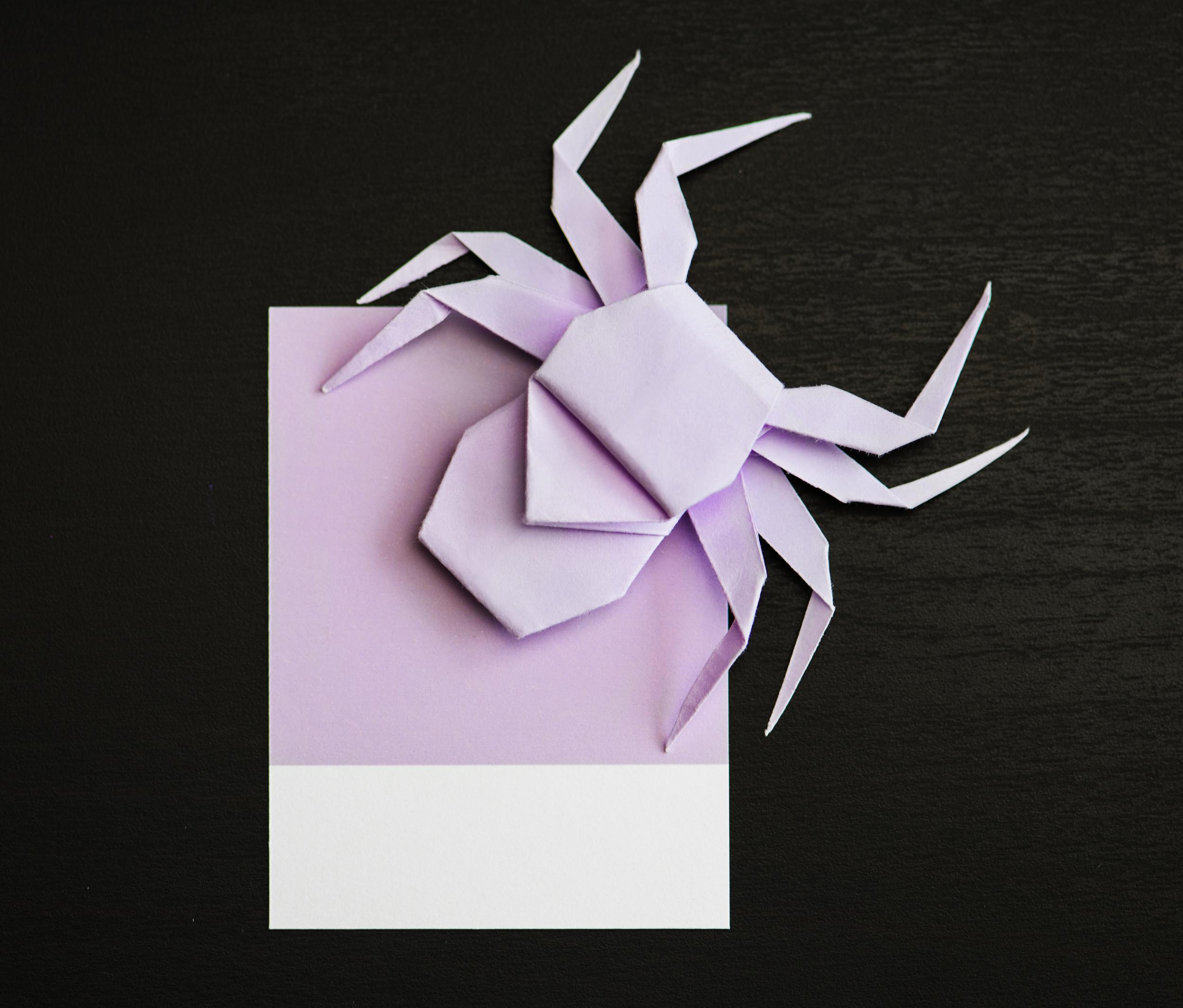 Animal Art Background Black Bright Bug Card Close Up Colorful Craft Creativity Decoration Decorative Design Folded