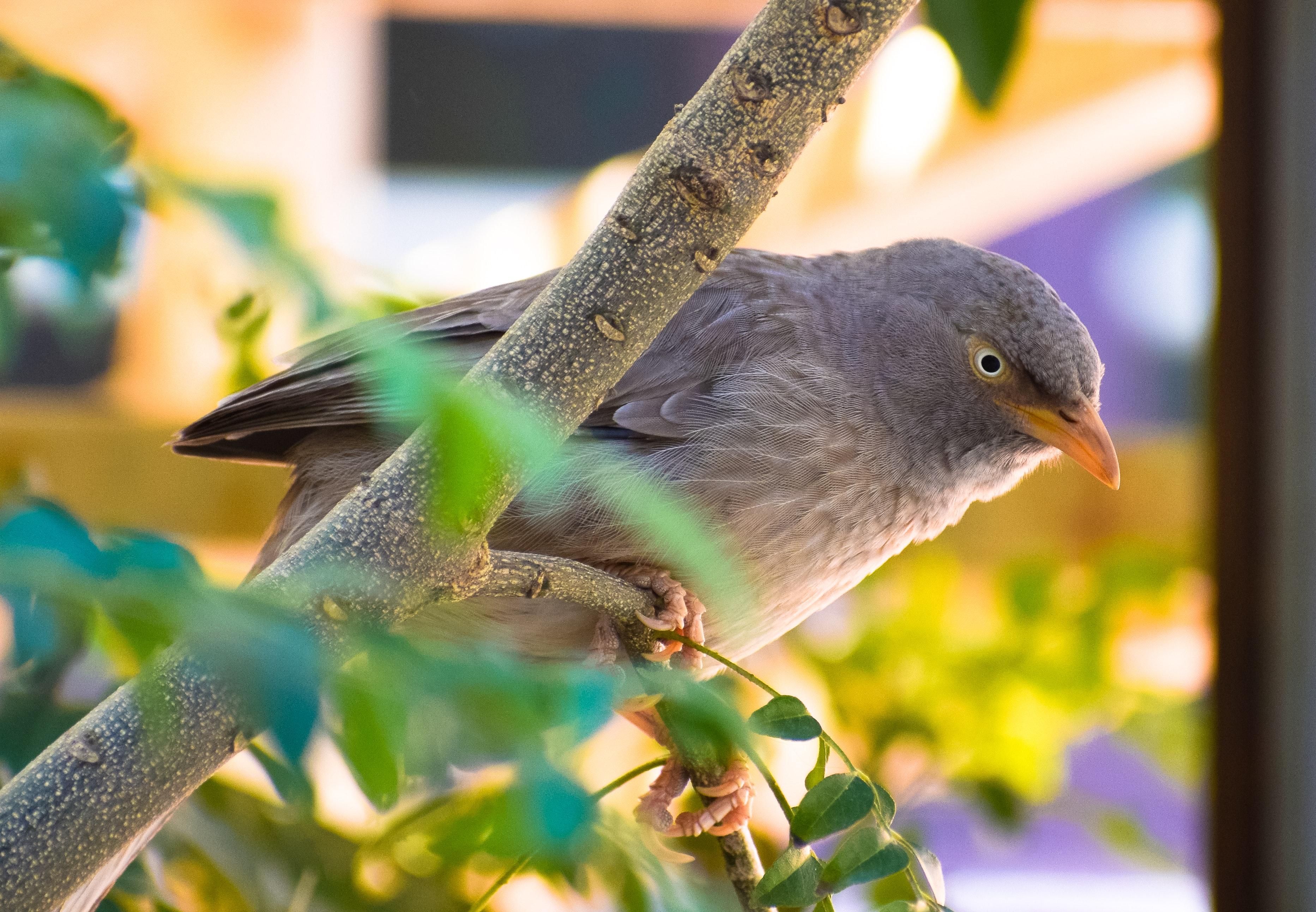 54+ Gambar Hewan Burung Surga Terbaik