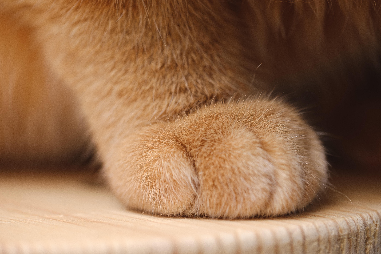 Chlpaté dievčatá mačička