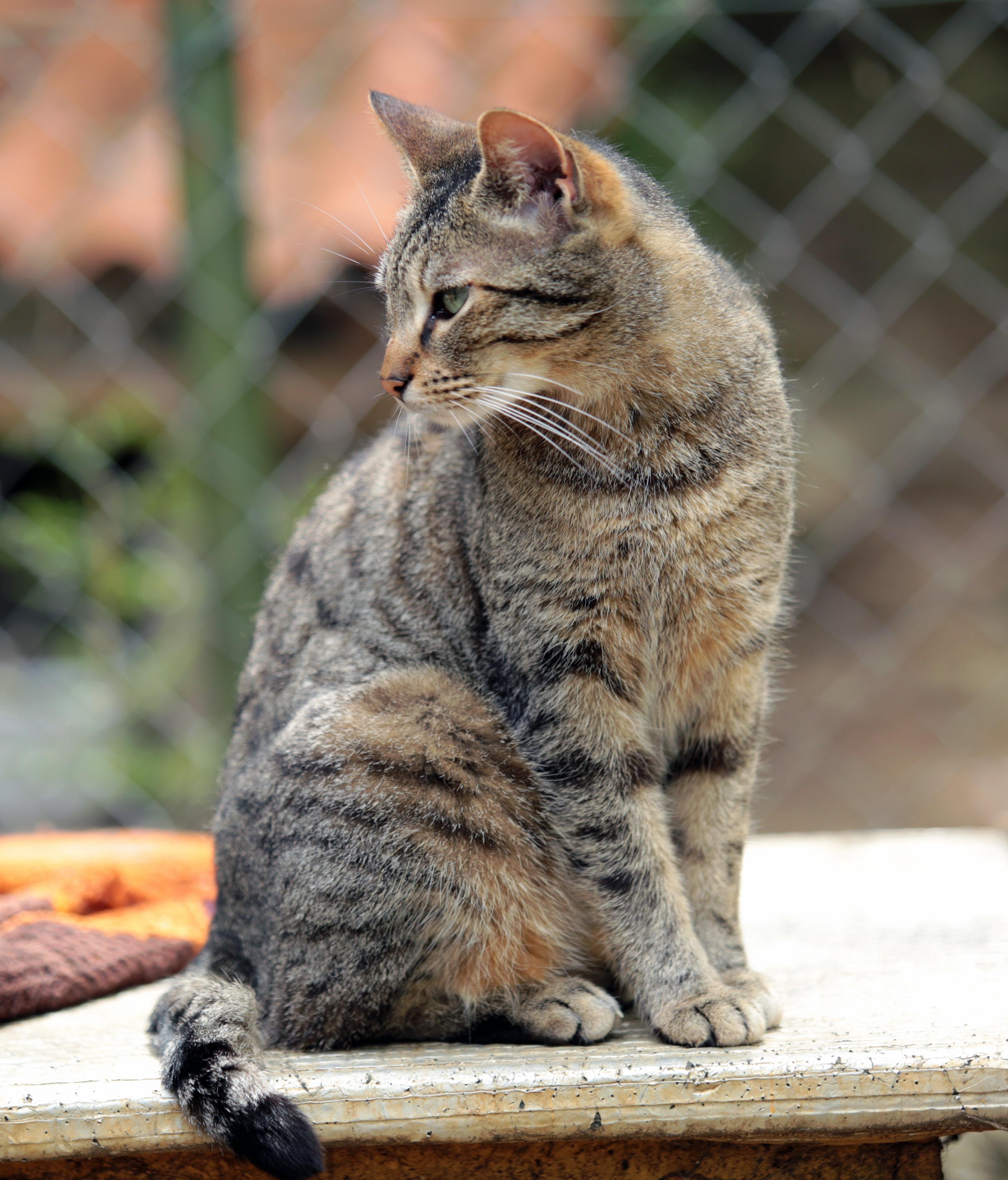 Gambar Licik Kucing Betina Binatang Menyusui Fauna
