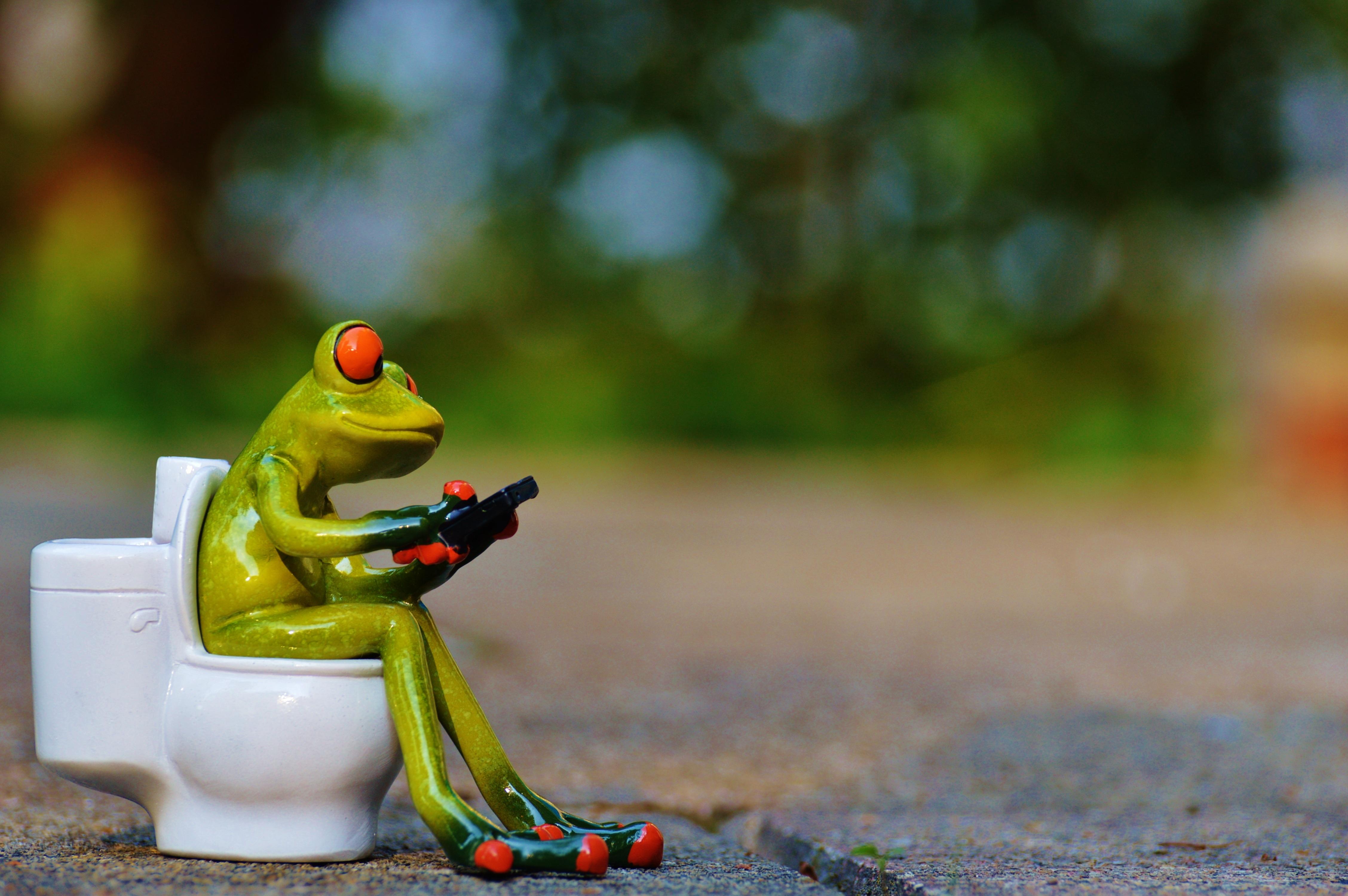 Images Gratuites : animal, mignonne, vert, Couleur, toilette ...
