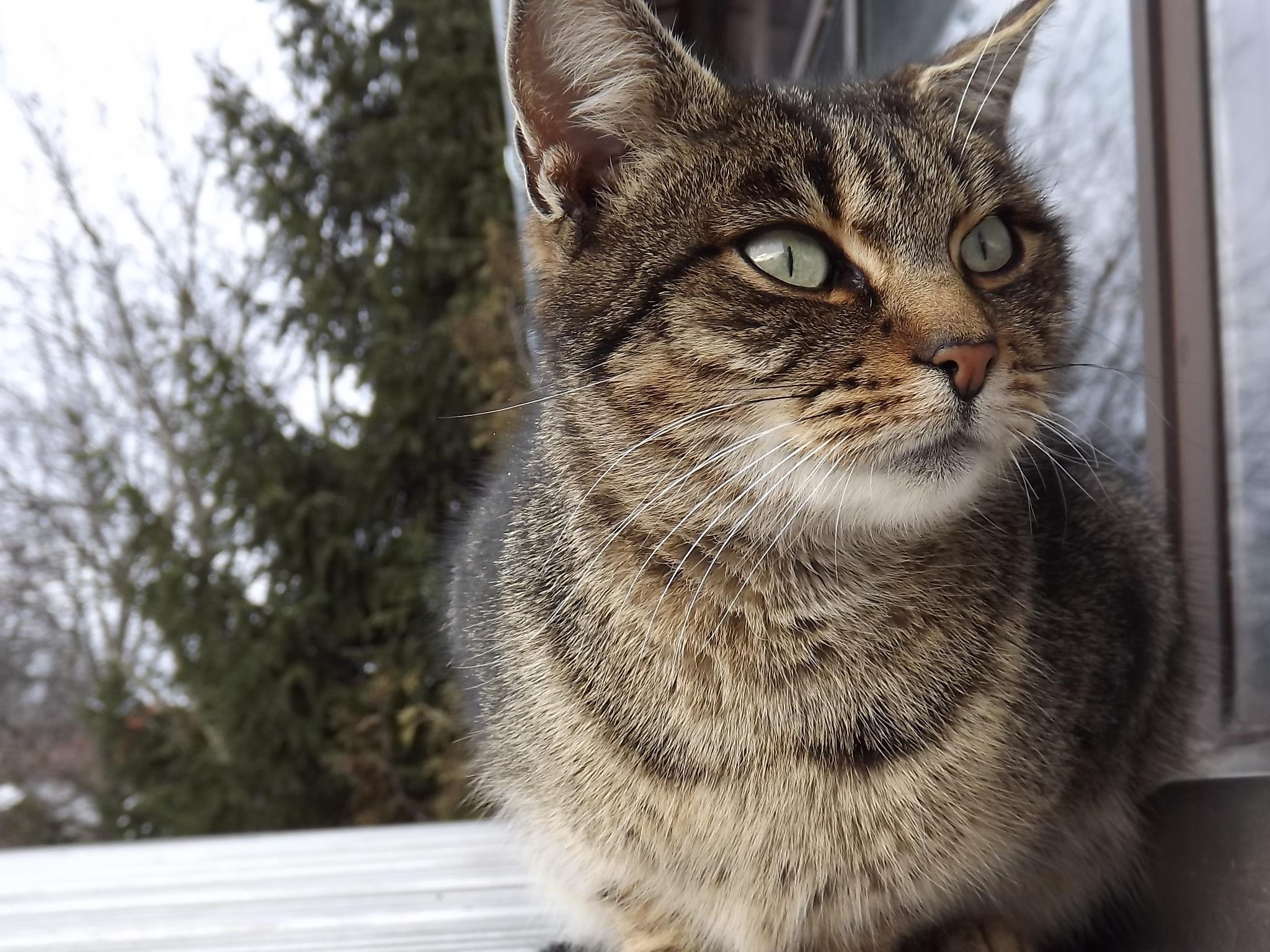 Darmowe Zdjęcia Zwierzę Uroczy Kotek Fauna Wąsy Kręgowiec