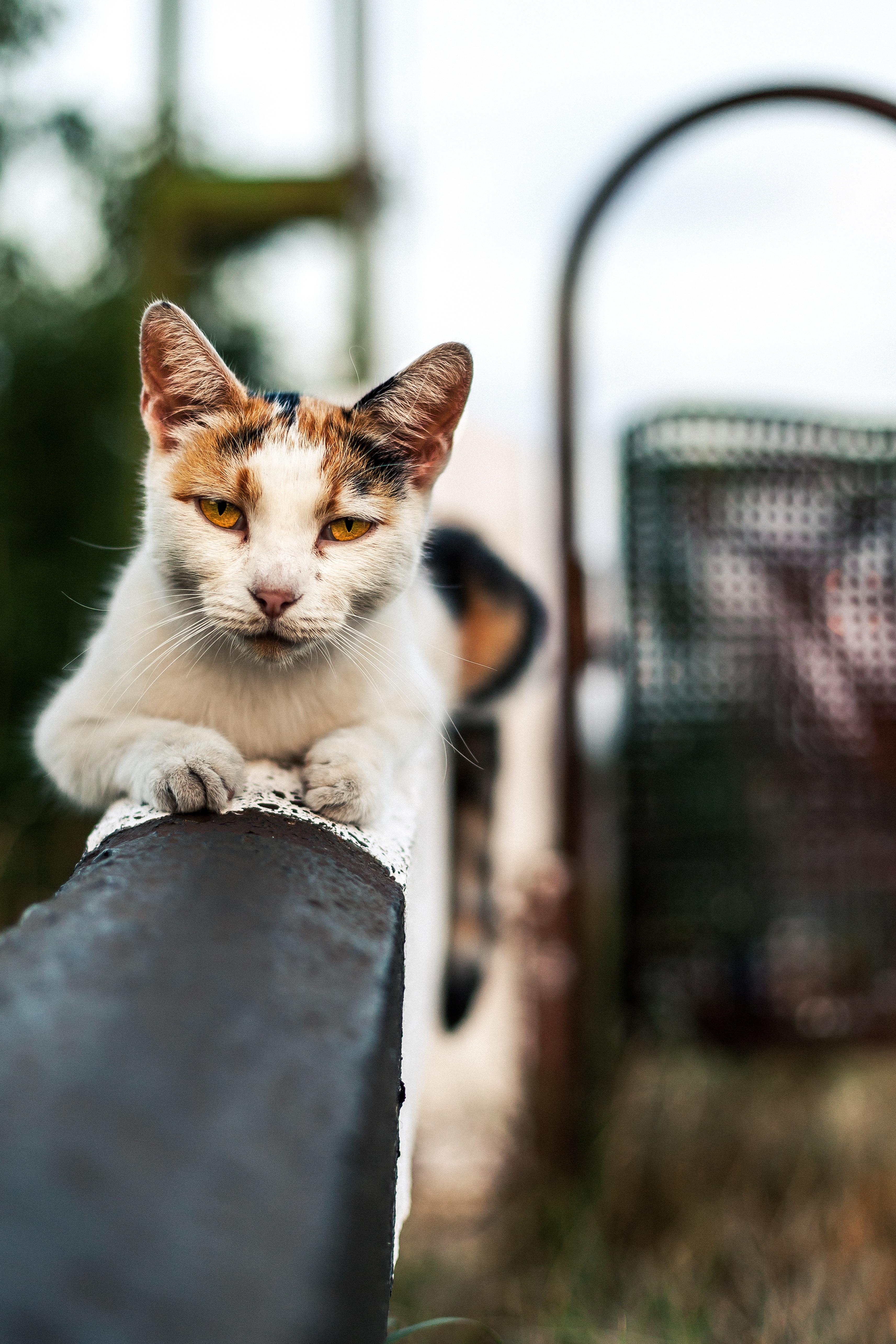 Poze Drăguţ In Cautarea Animal De Companie Blană Portret De