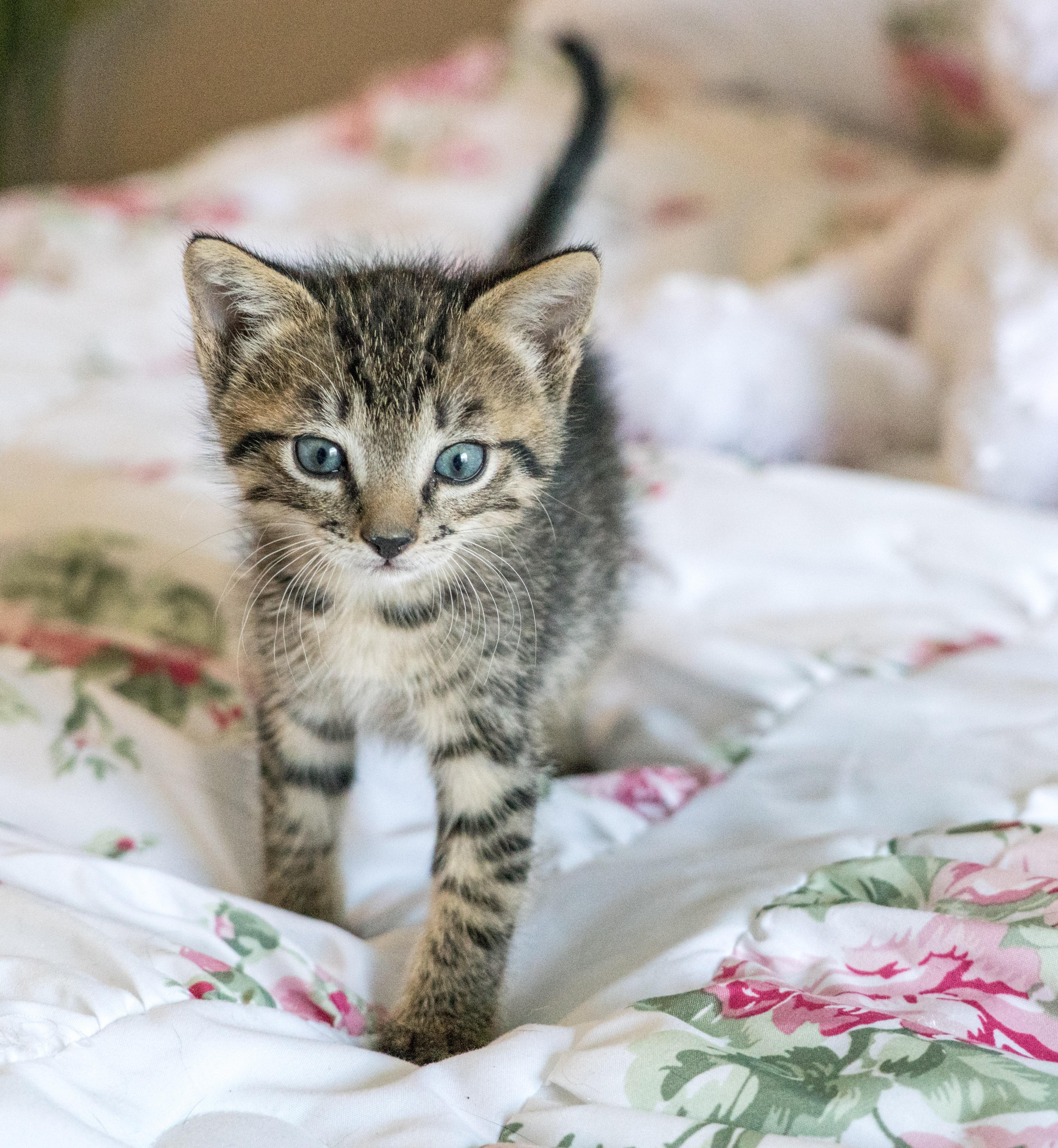 Unduh 99+  Gambar Kucing Kecil Imut Terlihat Keren Gratis