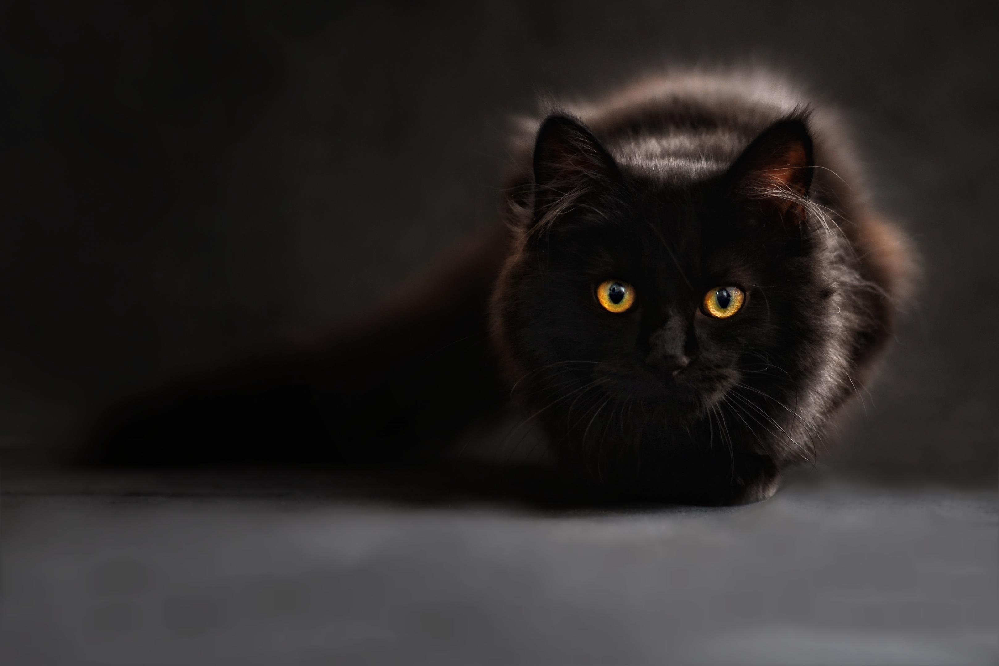 zadarmo čierne ženy mačička obrázky