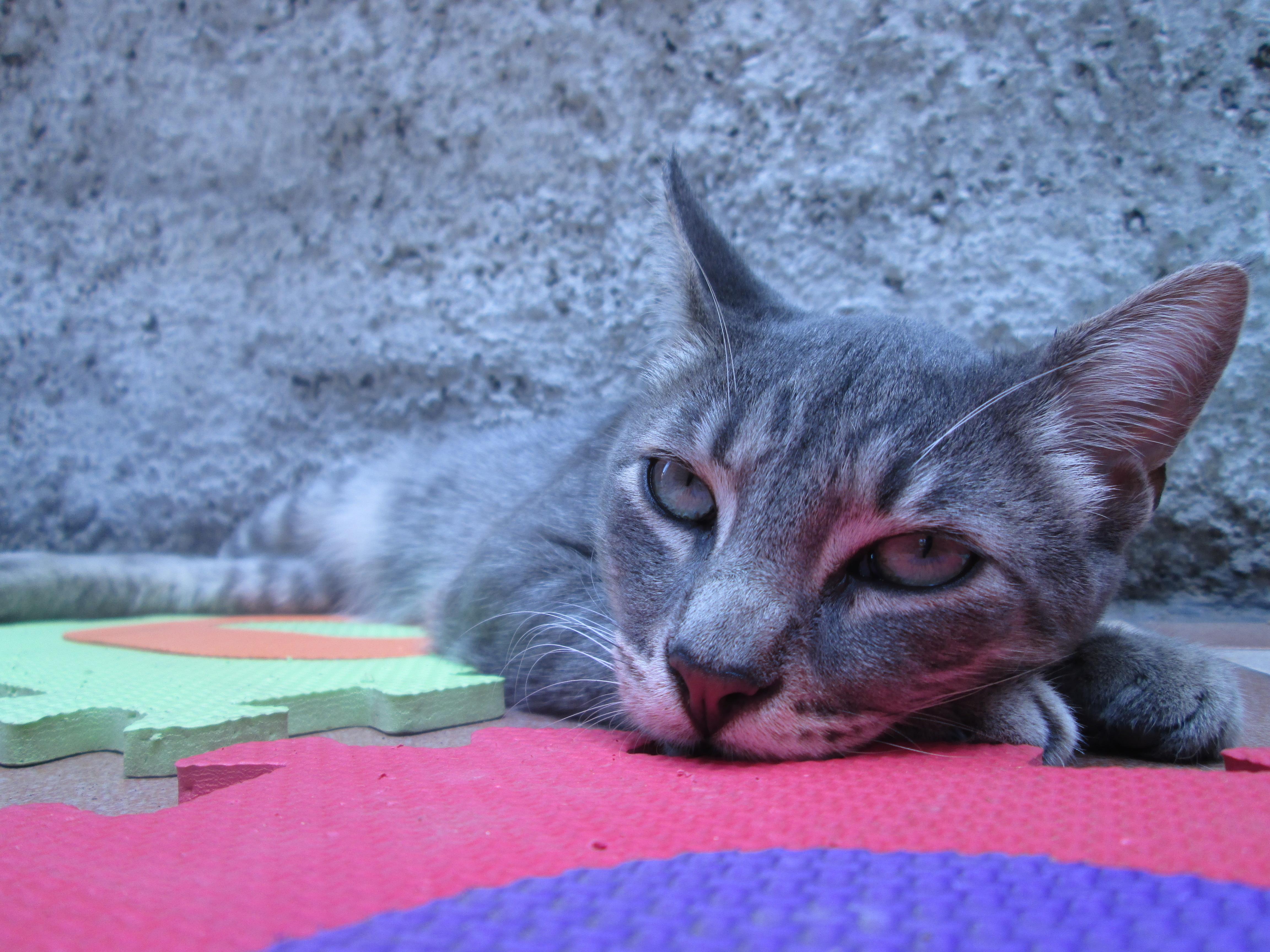 roztomilý mačička obrázok