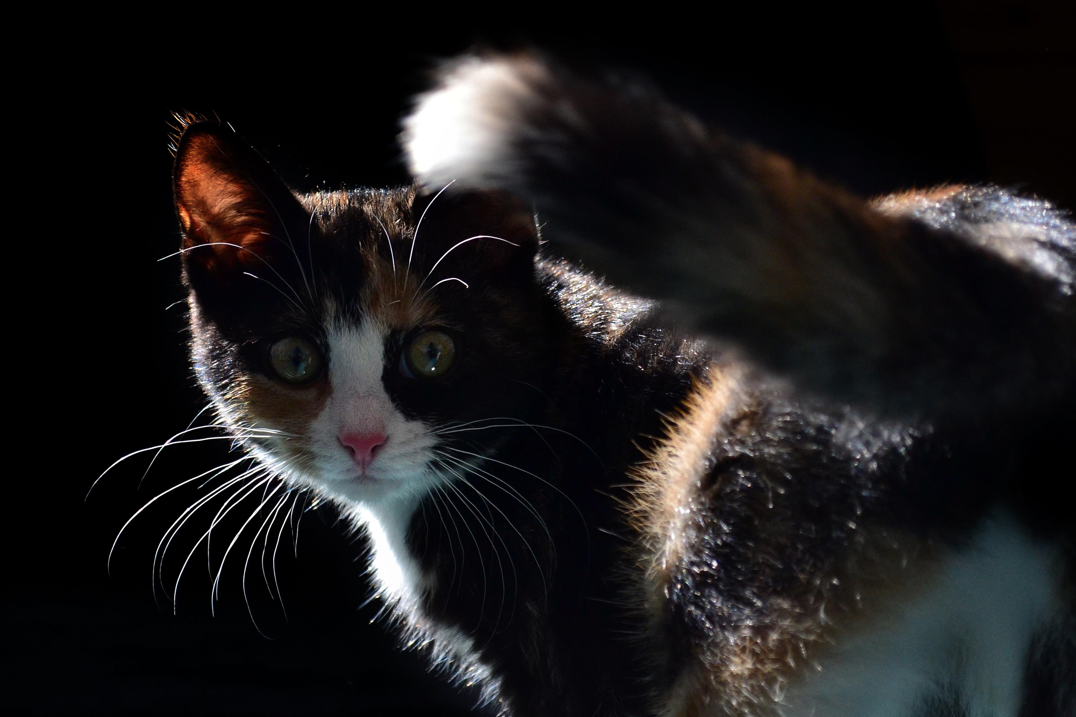 Zadarmo čierna ružová mačička