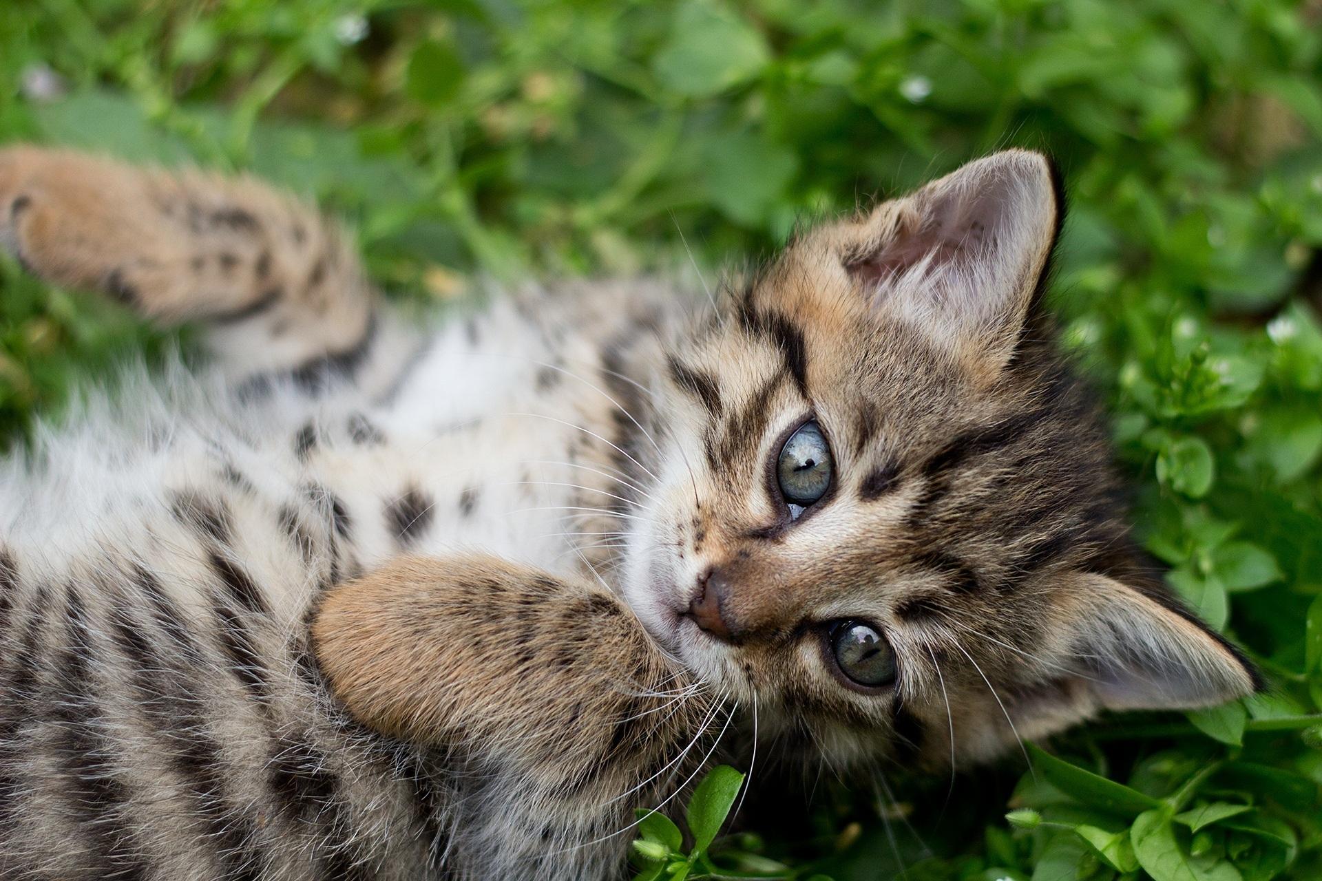 Cat Adoption Eastern Ct