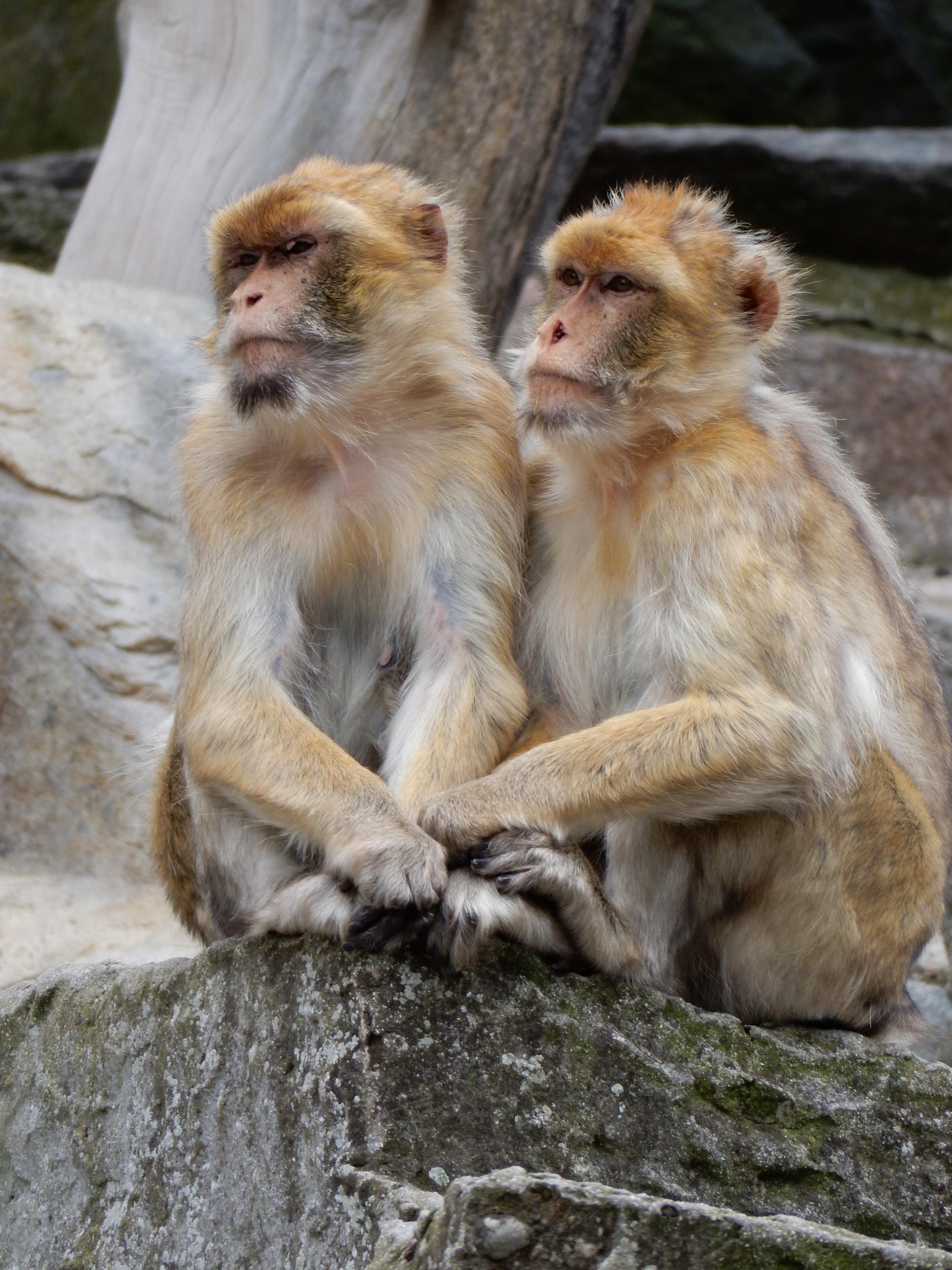 무료 이미지 : 귀엽다, 야생 생물, 동물원, 두, 포유 동물, 동물 상, 대주교, 척골가 있는, 융단