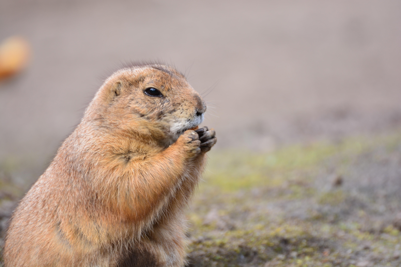 Fotos gratis  animal linda fauna silvestre Zoo pequea