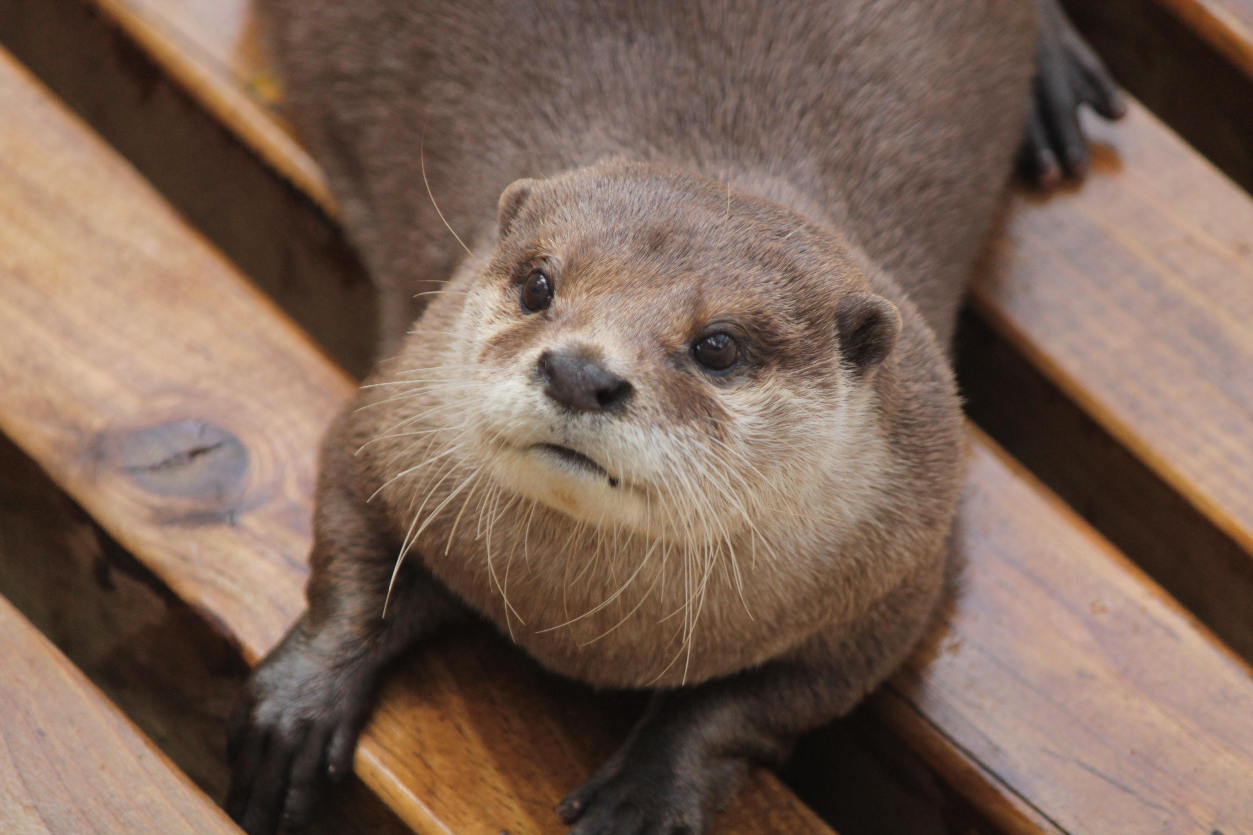 무료 이미지 귀엽다 동물원 모피 포유 동물 휴식 동물 상 구레나룻 머리 척골가 있는