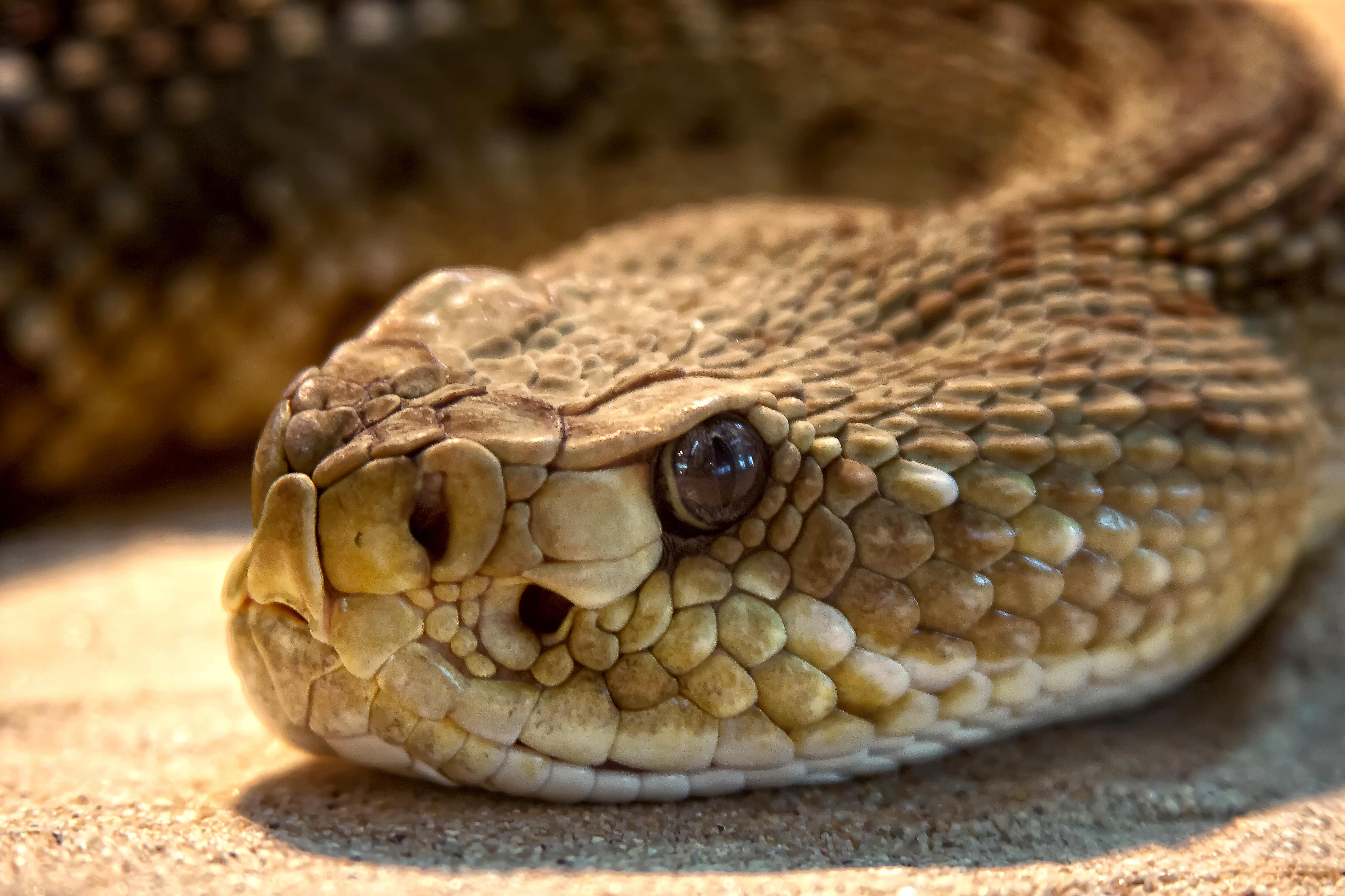 Змея гремучая скачать бесплатно mp3