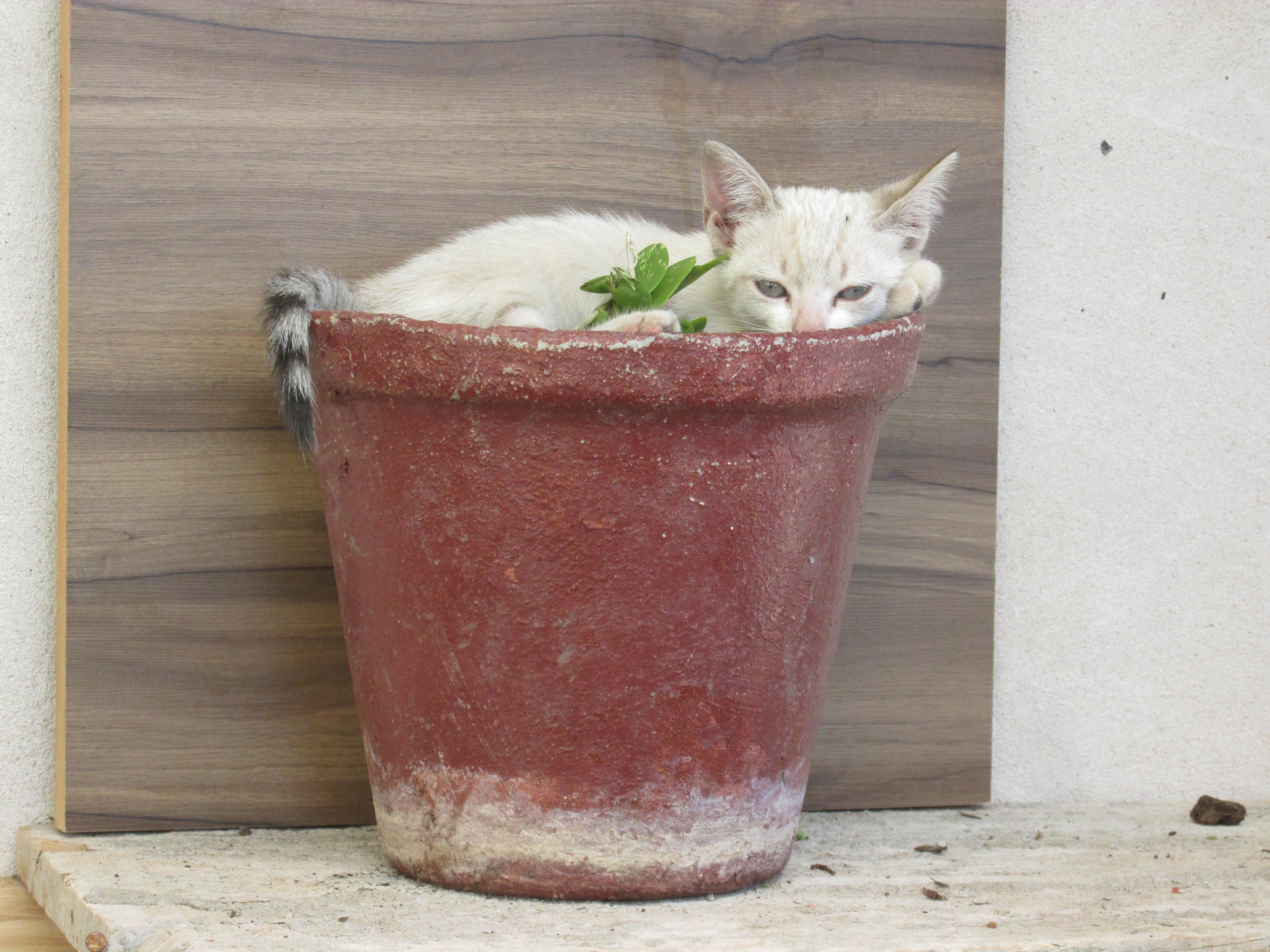 Gambar Hewan Makanan Anak Kucing Menghasilkan Lucu Lemak