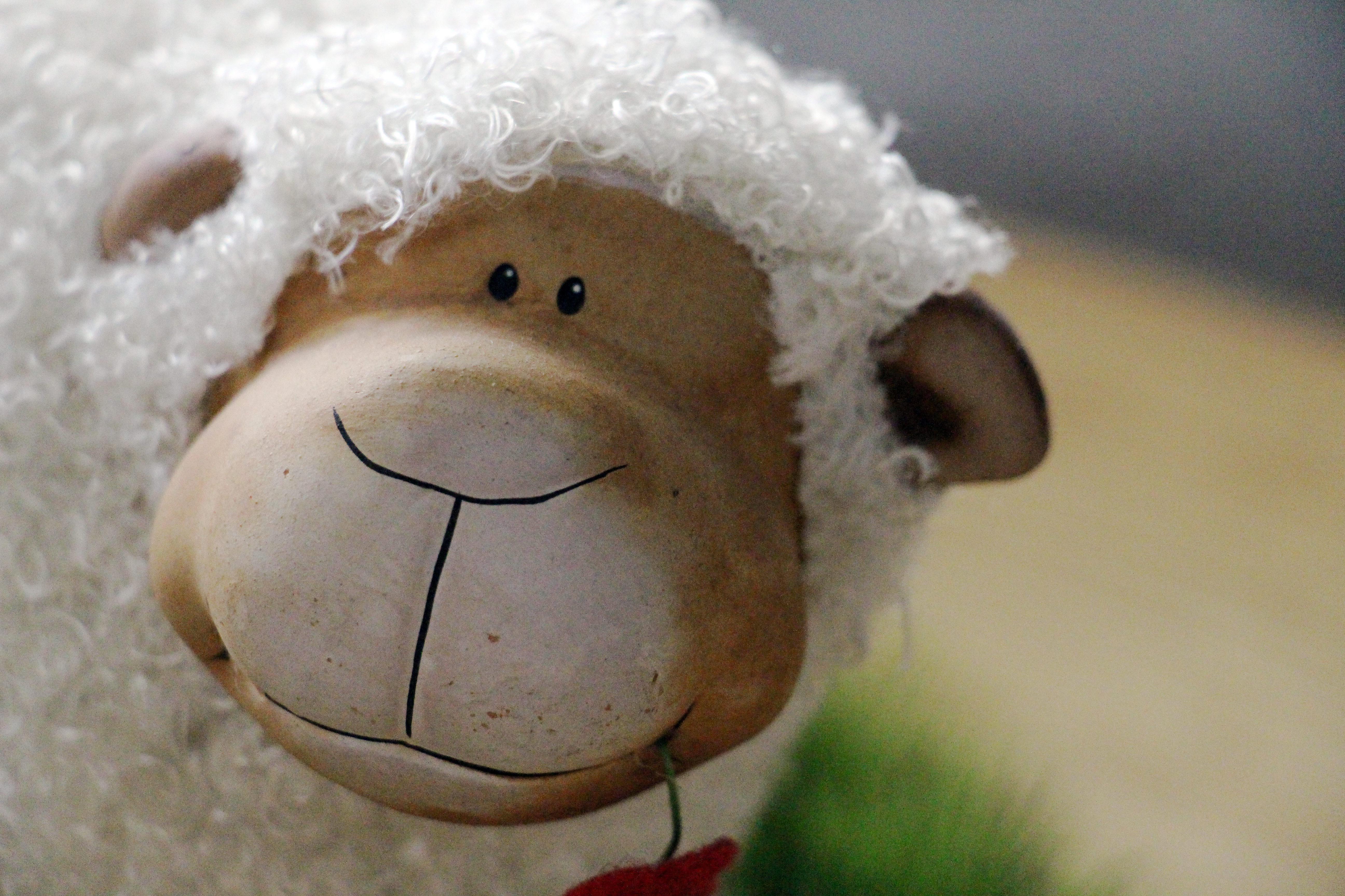 Gratis Afbeeldingen : dier, vacht, schapen, dichtbij ...