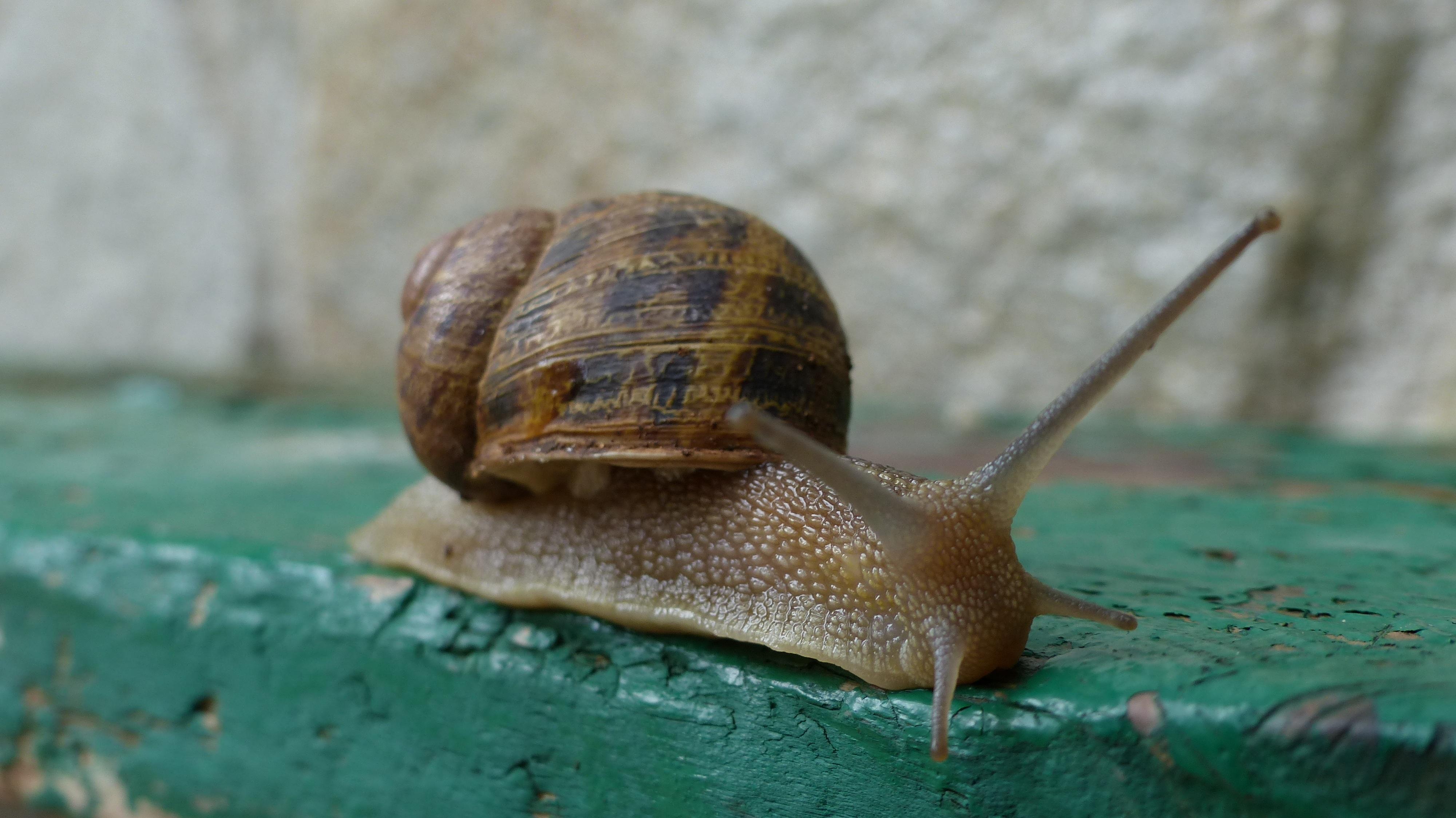 Kostenlose foto : Tier, Grün, Makro, Biologie, Garten, Fauna ...