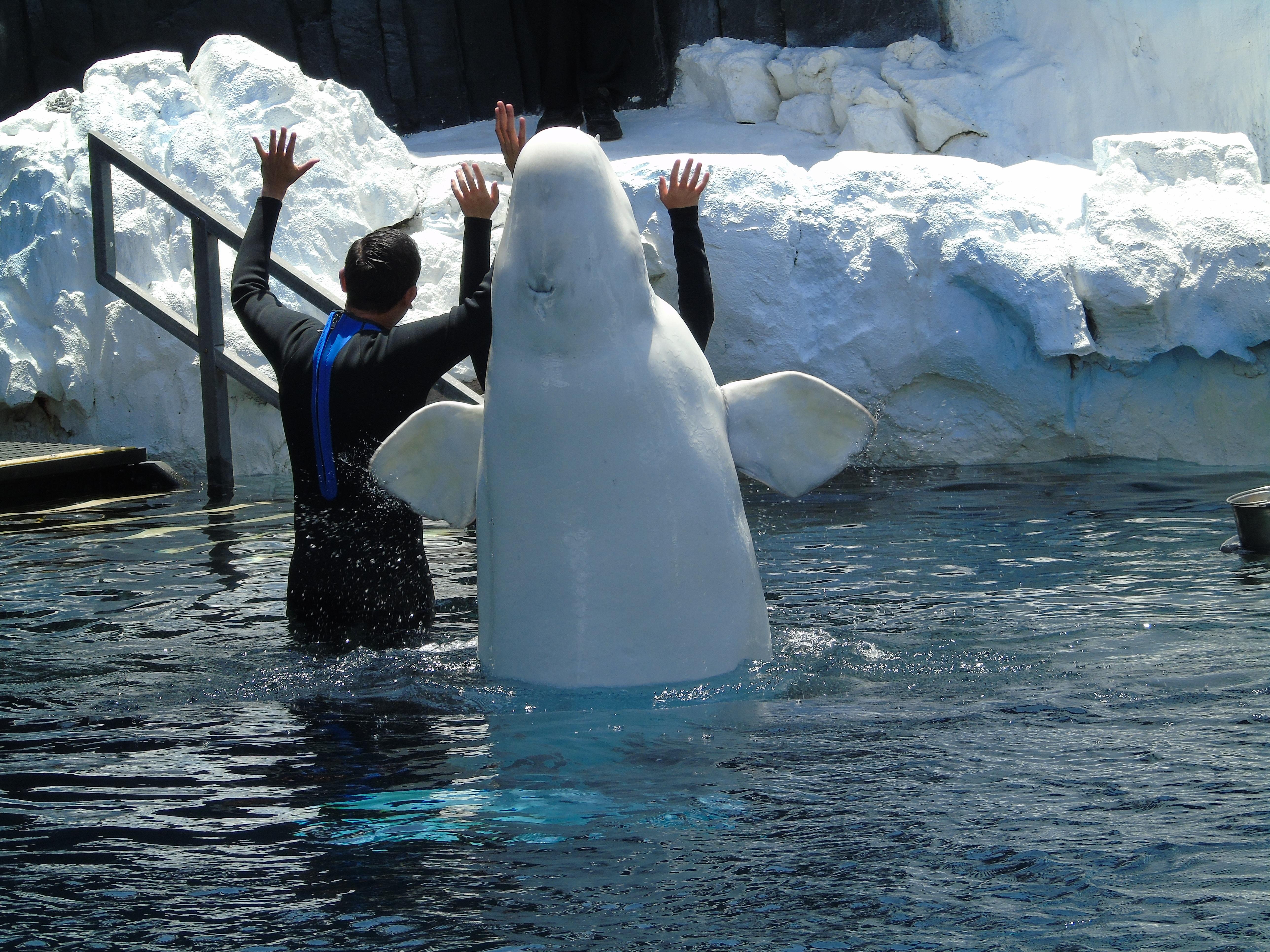Beliebt Bevorzugt Kostenlose foto : Tier, Eis, Zoo, Säugetier, Wasser-, Arktis #SB_89