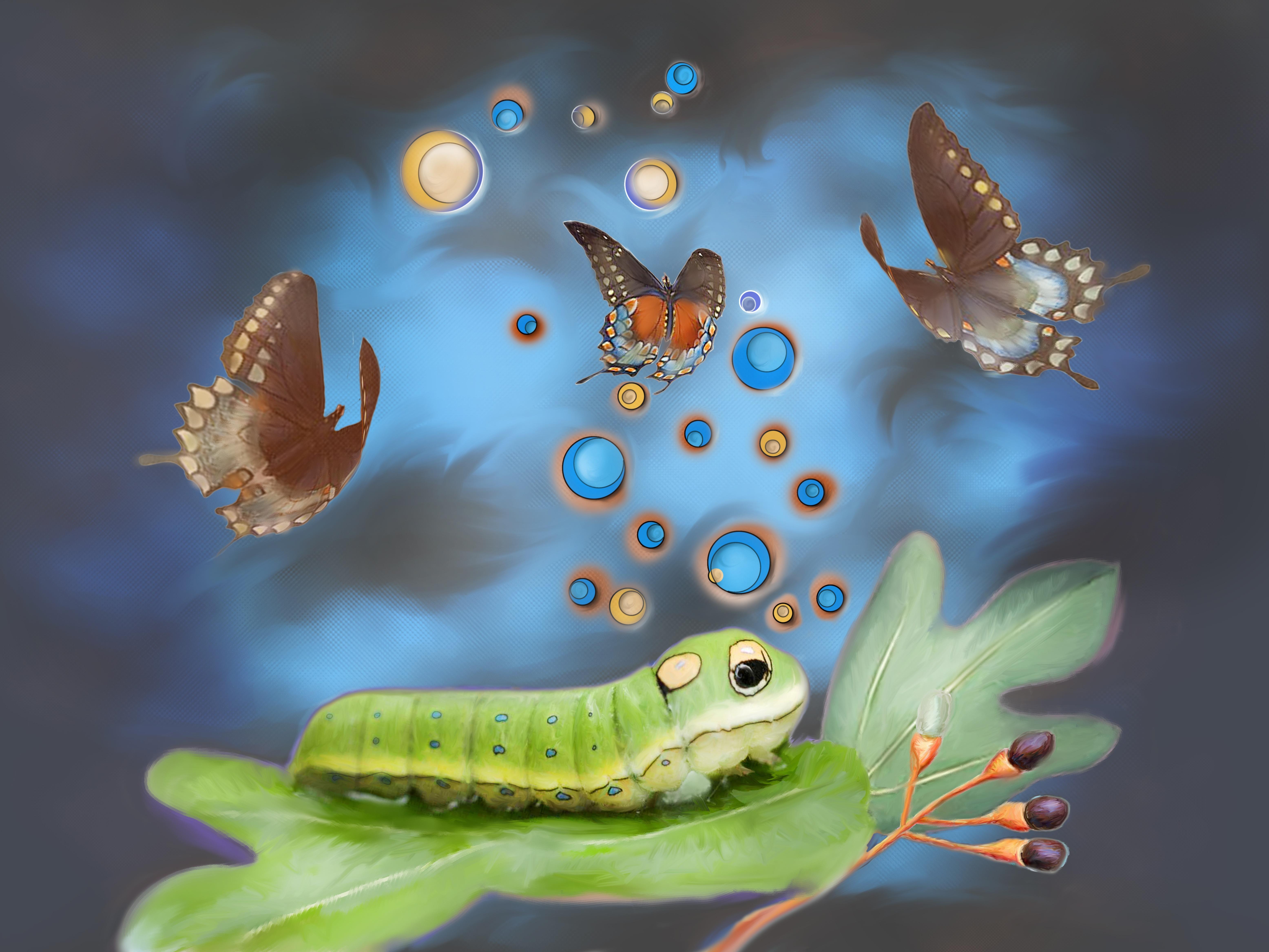 Fotoğraf Hayvan Böcek Biyoloji Güve Kelebek Fauna Omurgasız