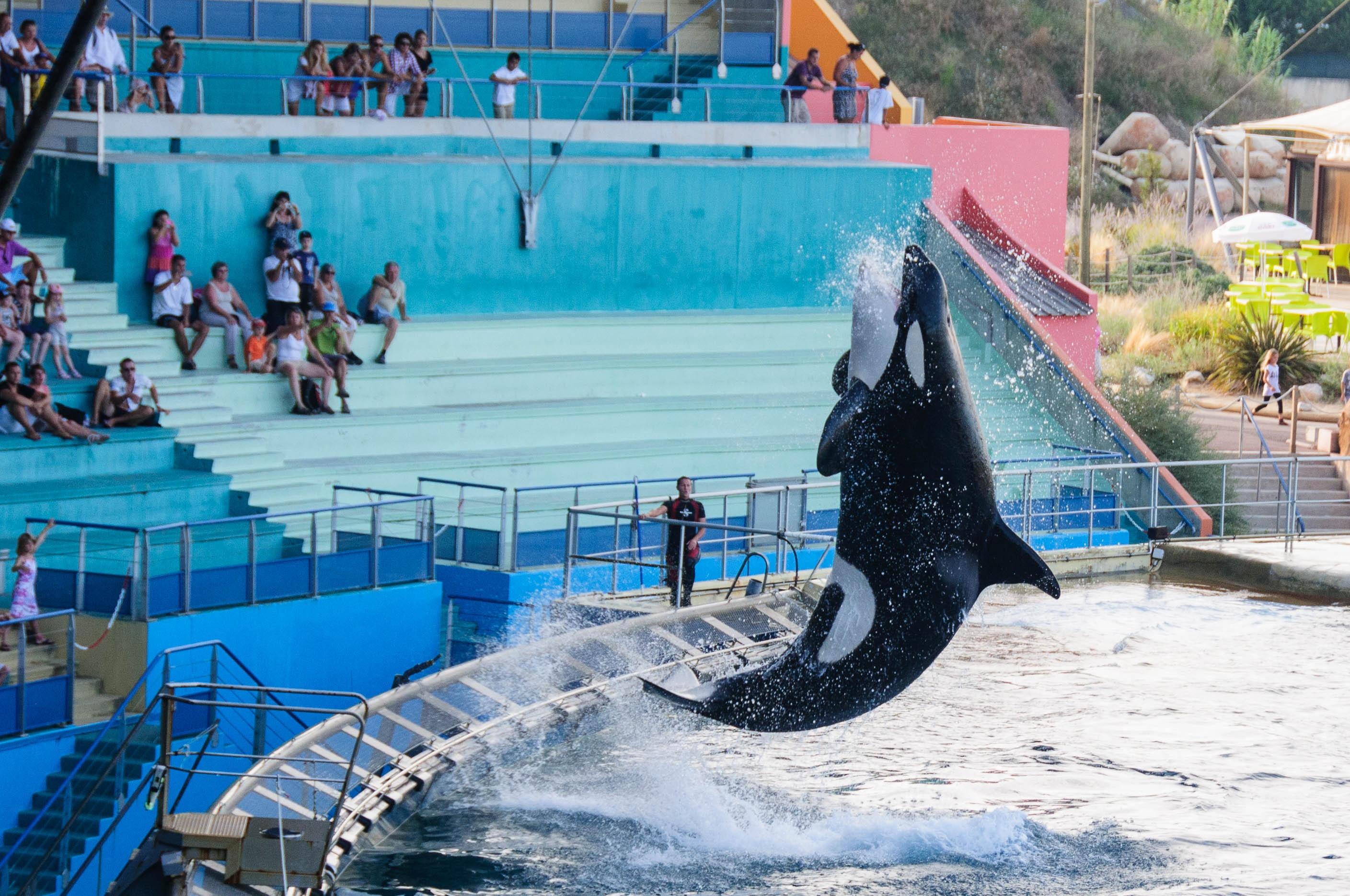 Fotos gratis animal saltar piscina Zoo parque de atracciones