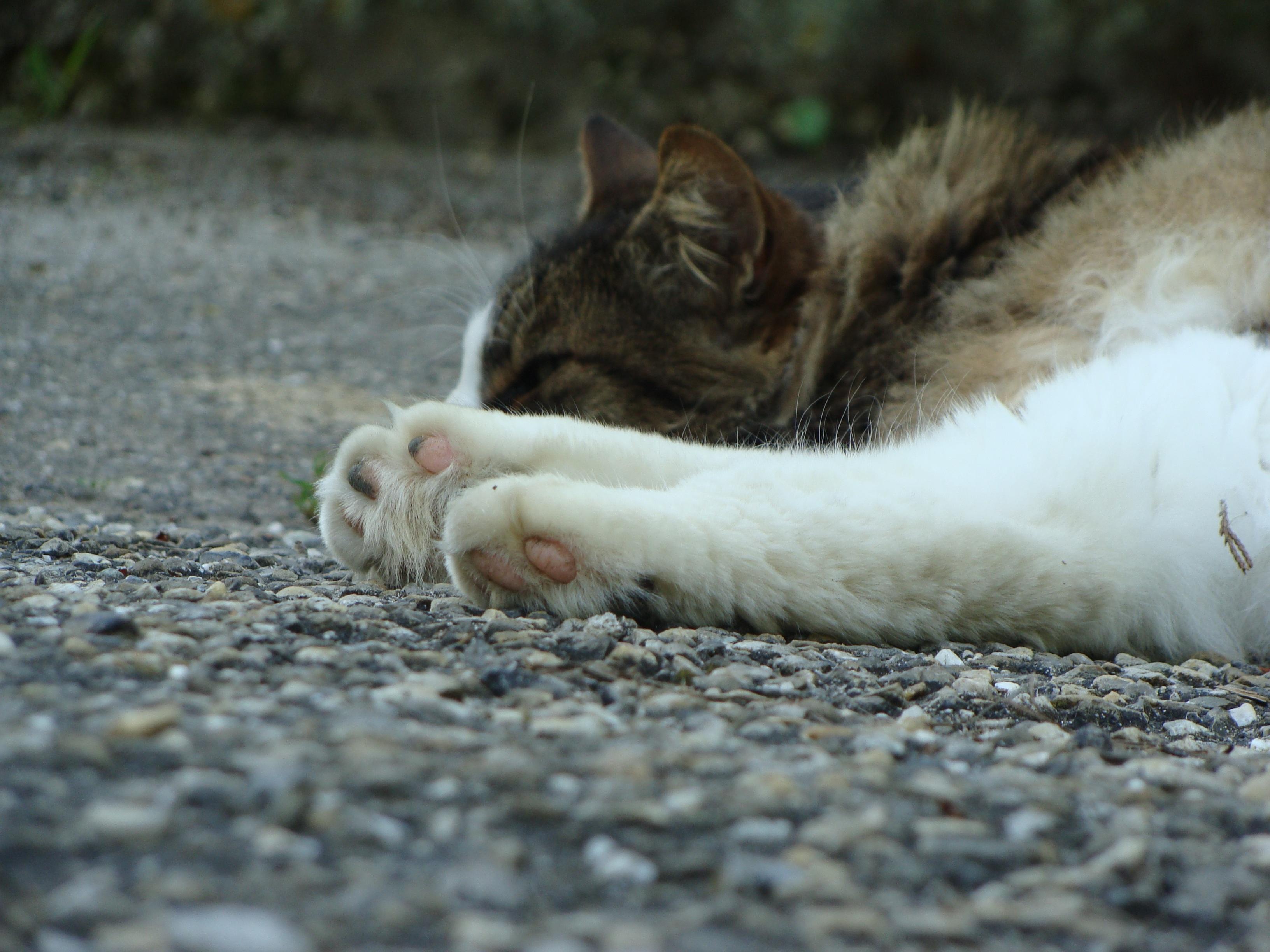 zadarmo mladá čierna mačička