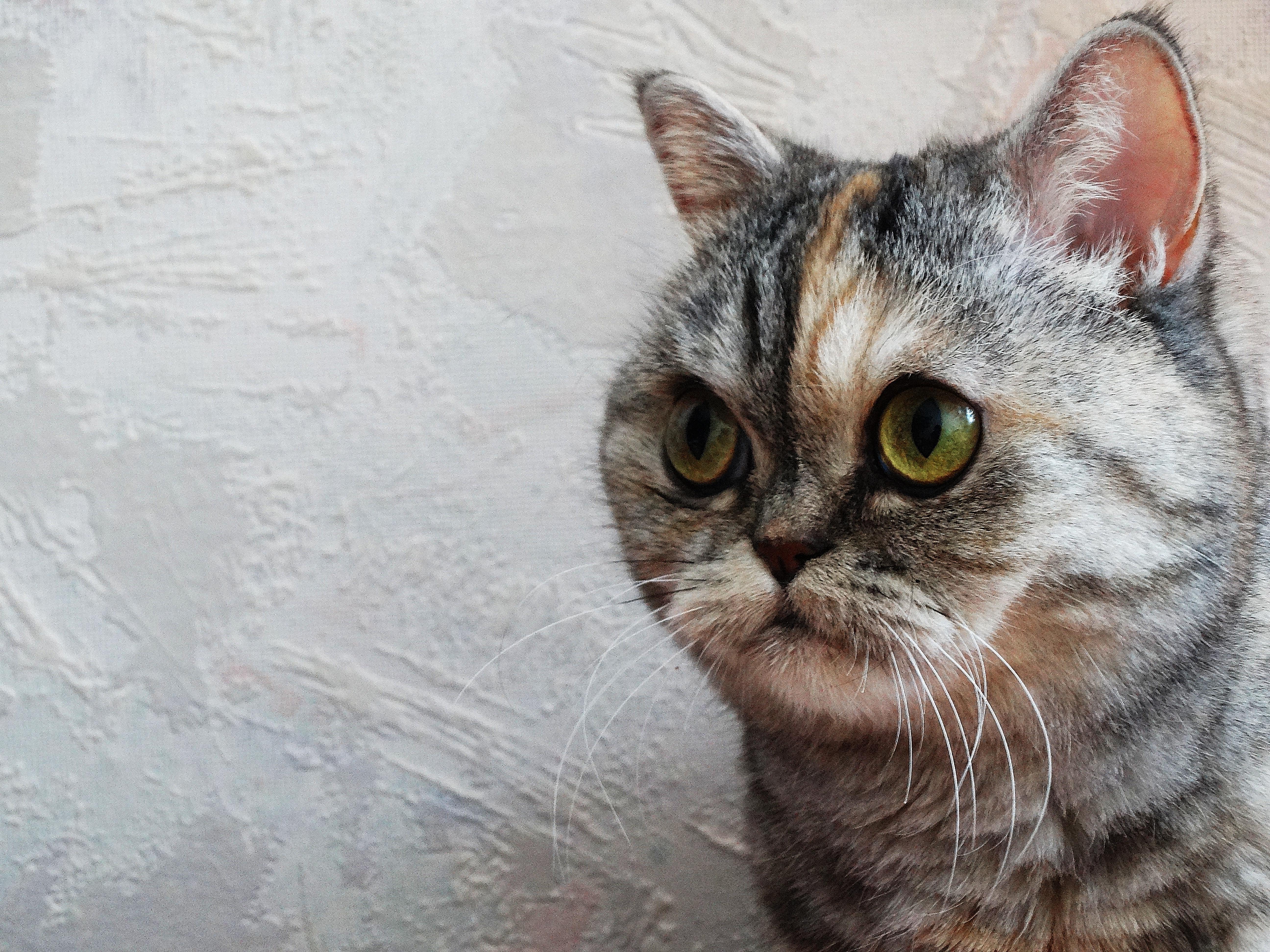 Free animal kitten fauna pets whiskers vertebrate
